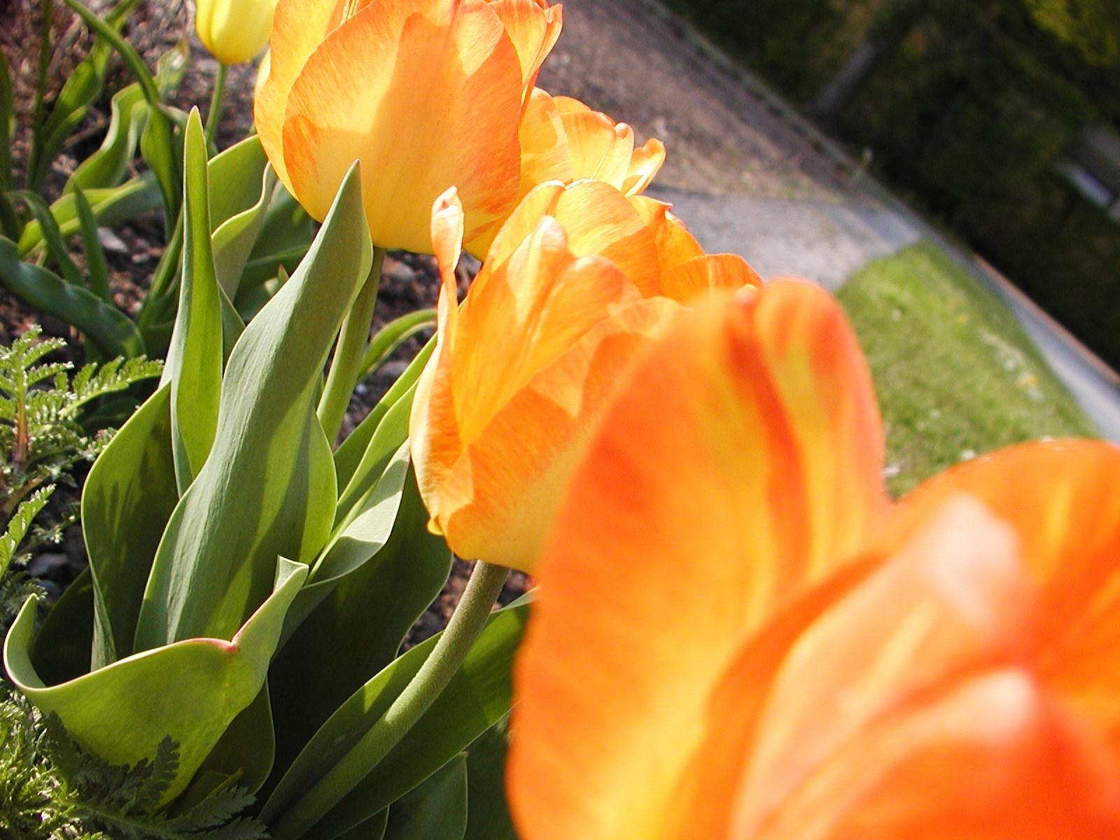 Orange flowers photo