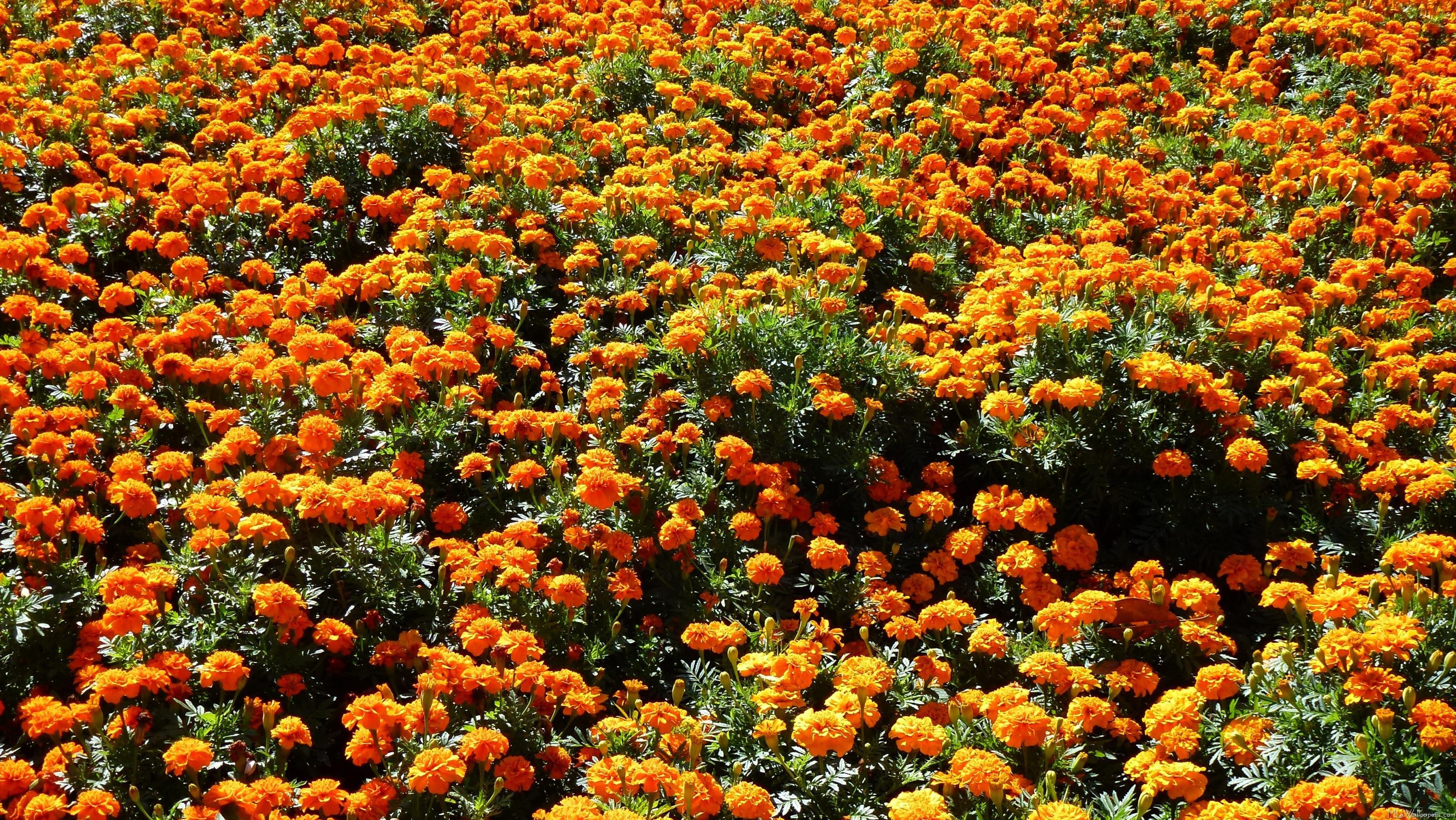 Free photo: Orange garden flower - Outdoors, Orange, Small - Free ...