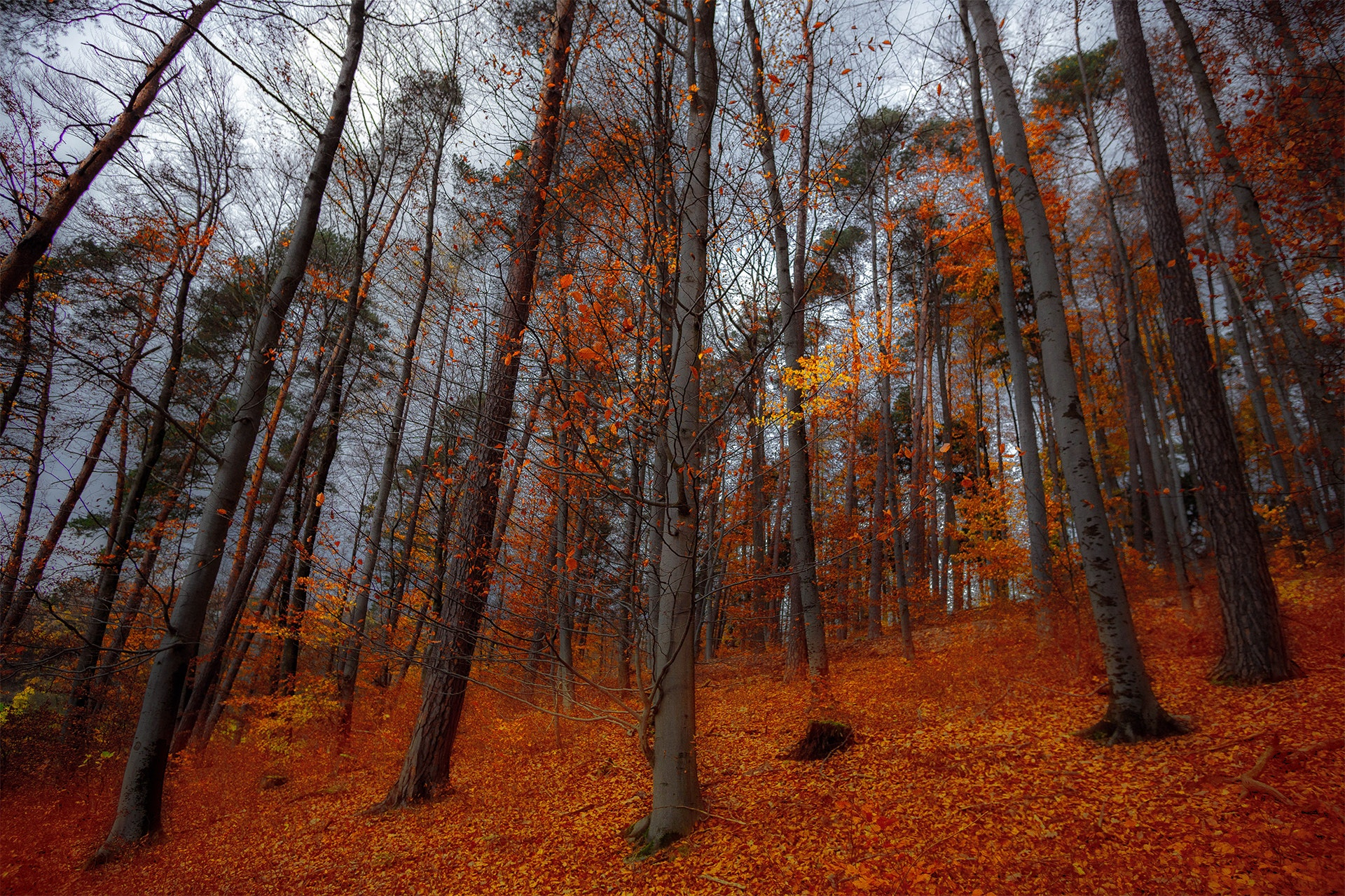 Orange Leave Trees, Autumn, Light, Trees, Tree trunks, HQ Photo