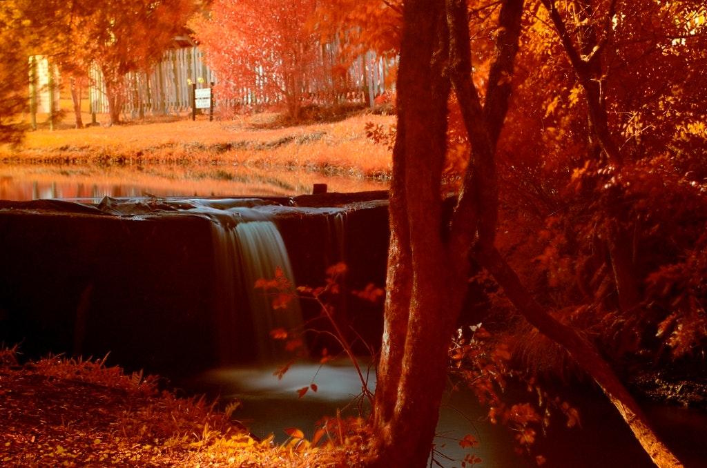 Orange Maple Trees Painting, Blur, Dawn, Fall, Landscape, HQ Photo
