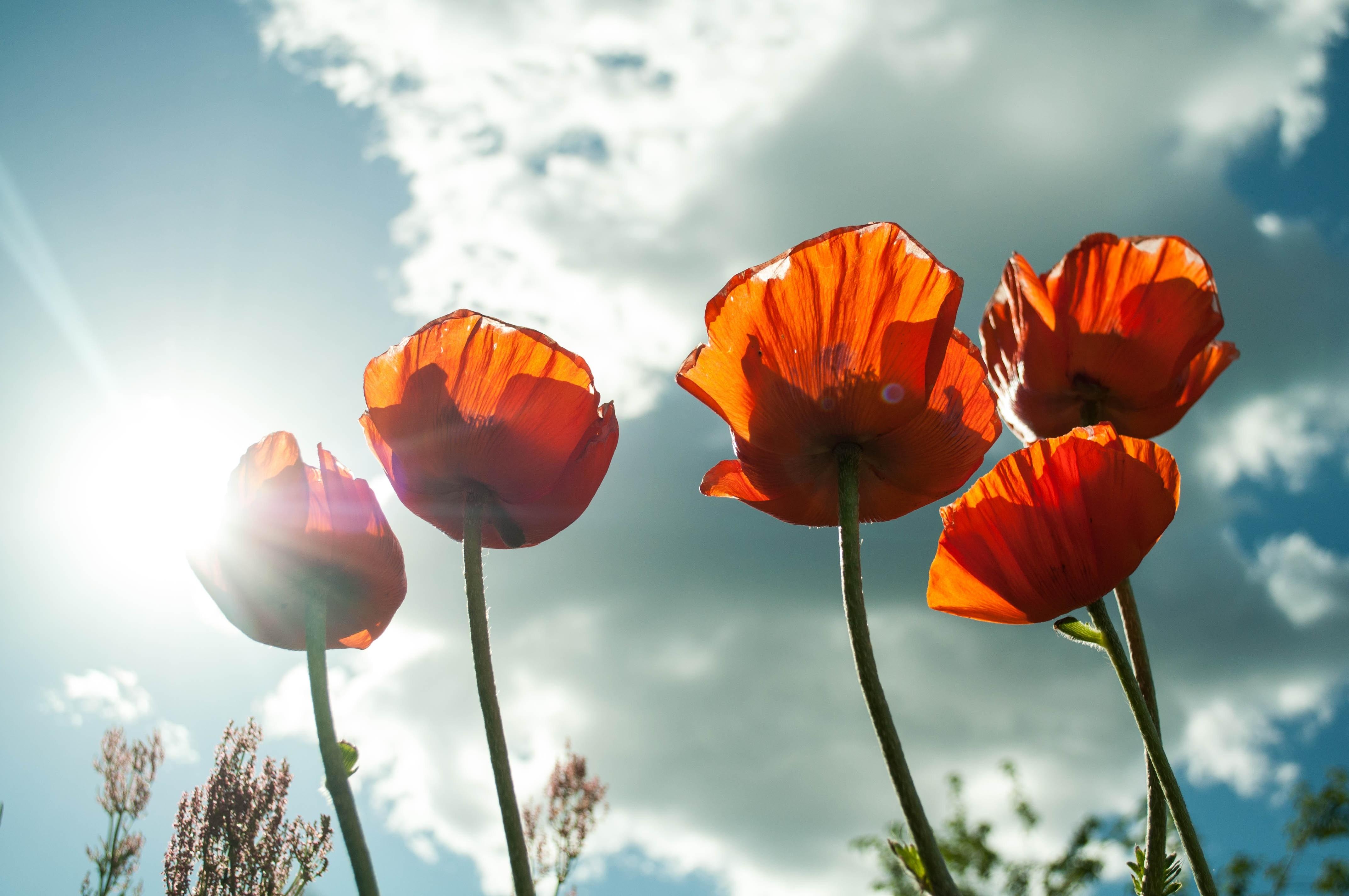 Orange petaled flower photo