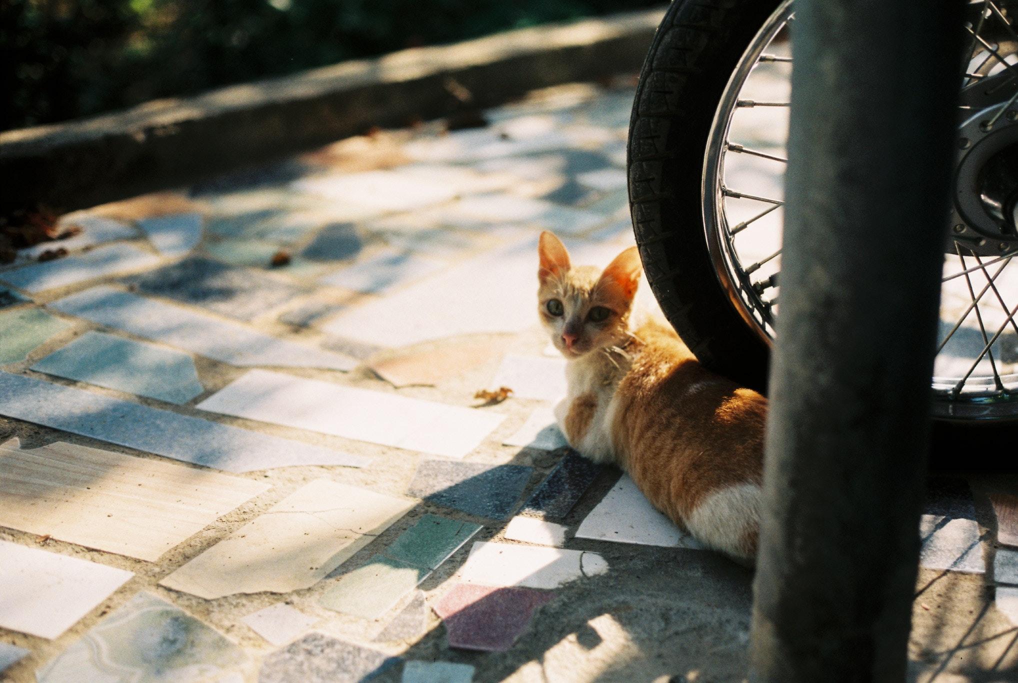 Orange tabby kitten on motorcycle wheel photo