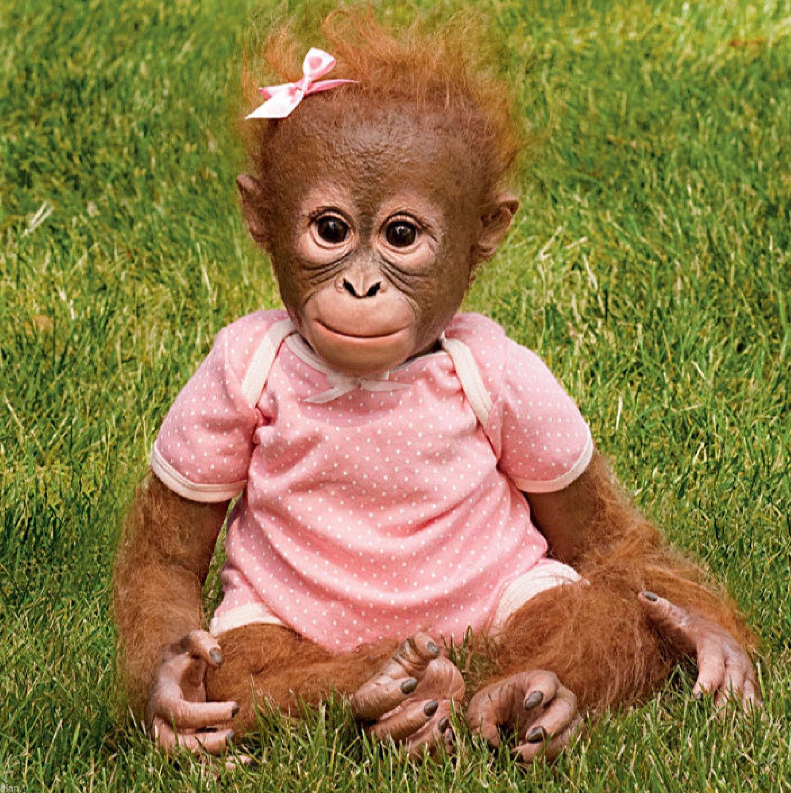 Ebay Ashton Drake Annabelle's Hug, Lifelike baby Orangutan Monkey ...