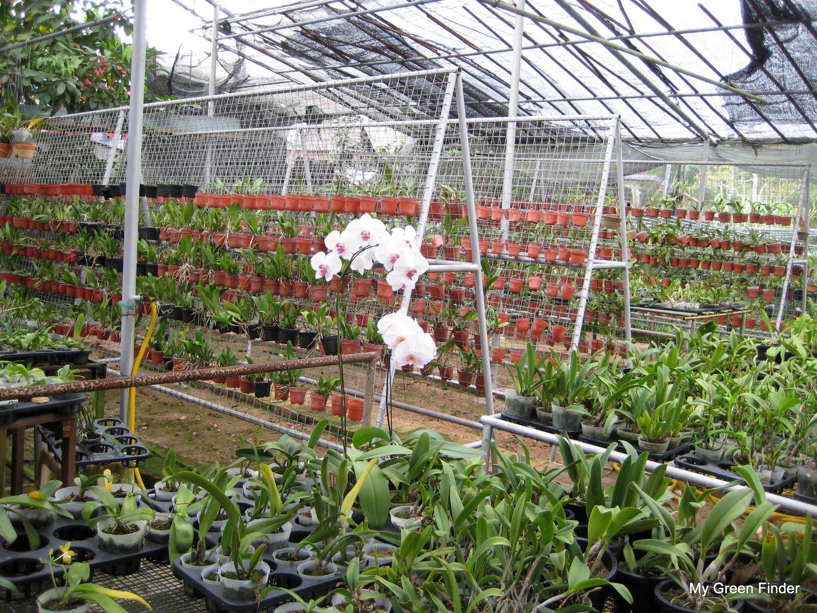 Free Photo Orchid Nursery Beauty