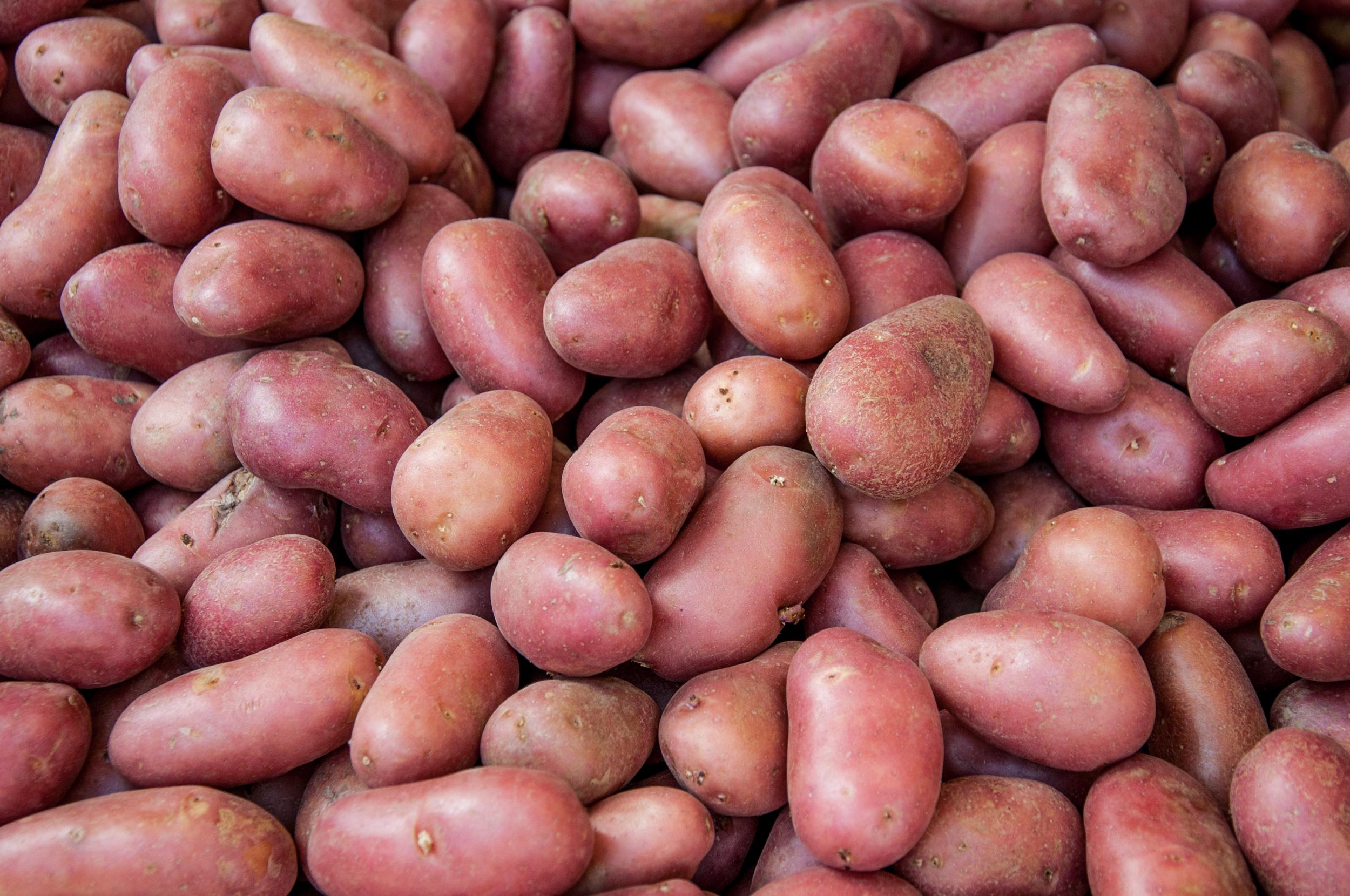 Organic red potato pile sold on market photo