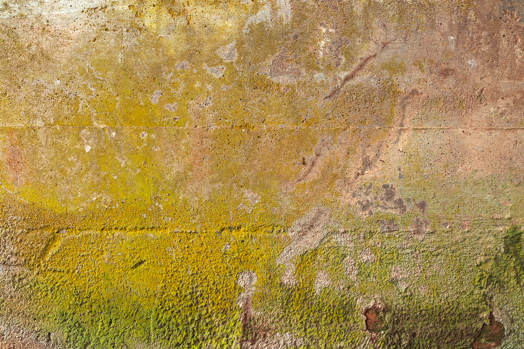 Organic wall decay - hdr texture photo