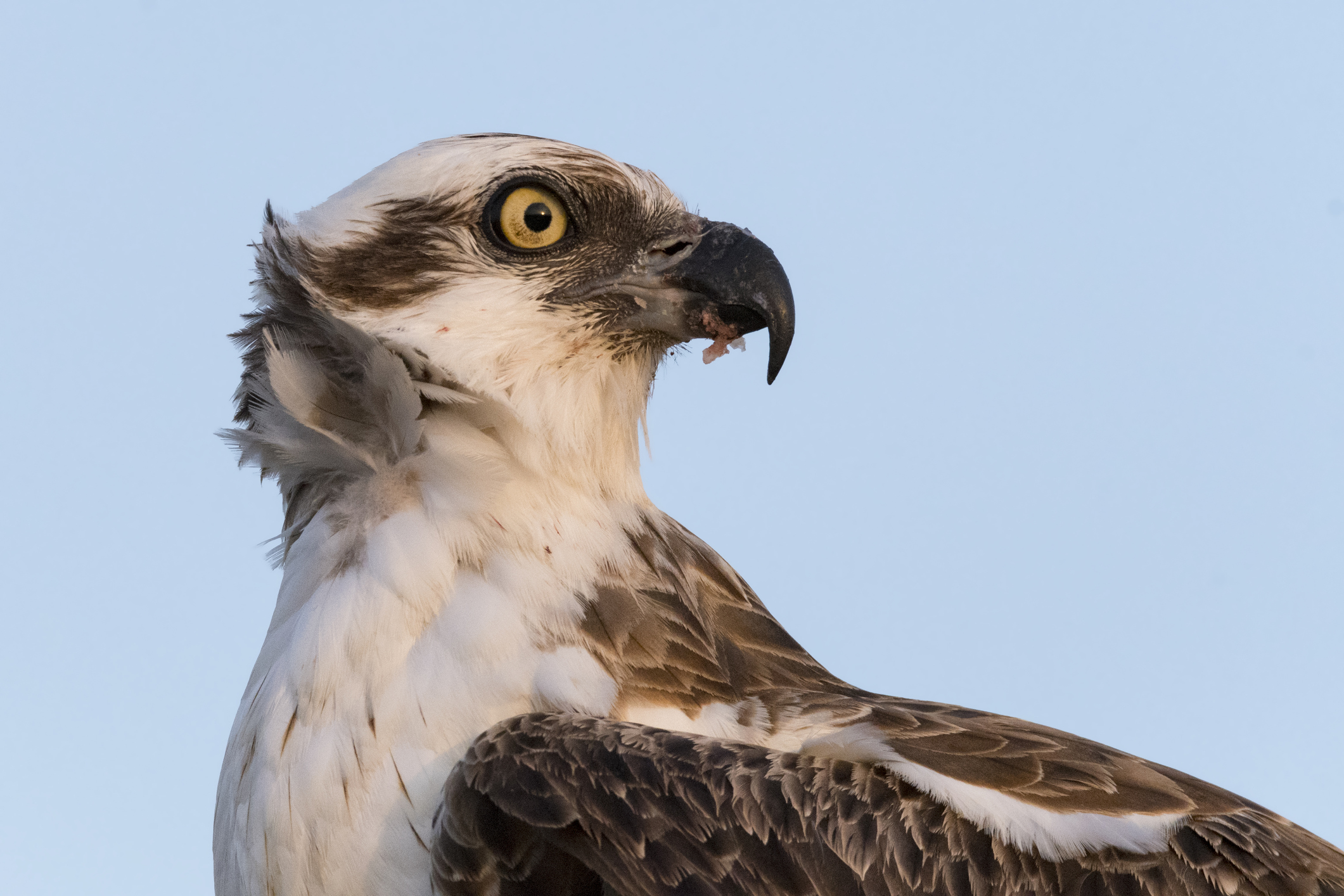 JCP&L Teams With Scouts to Relocate Osprey Nest | Transmission ...