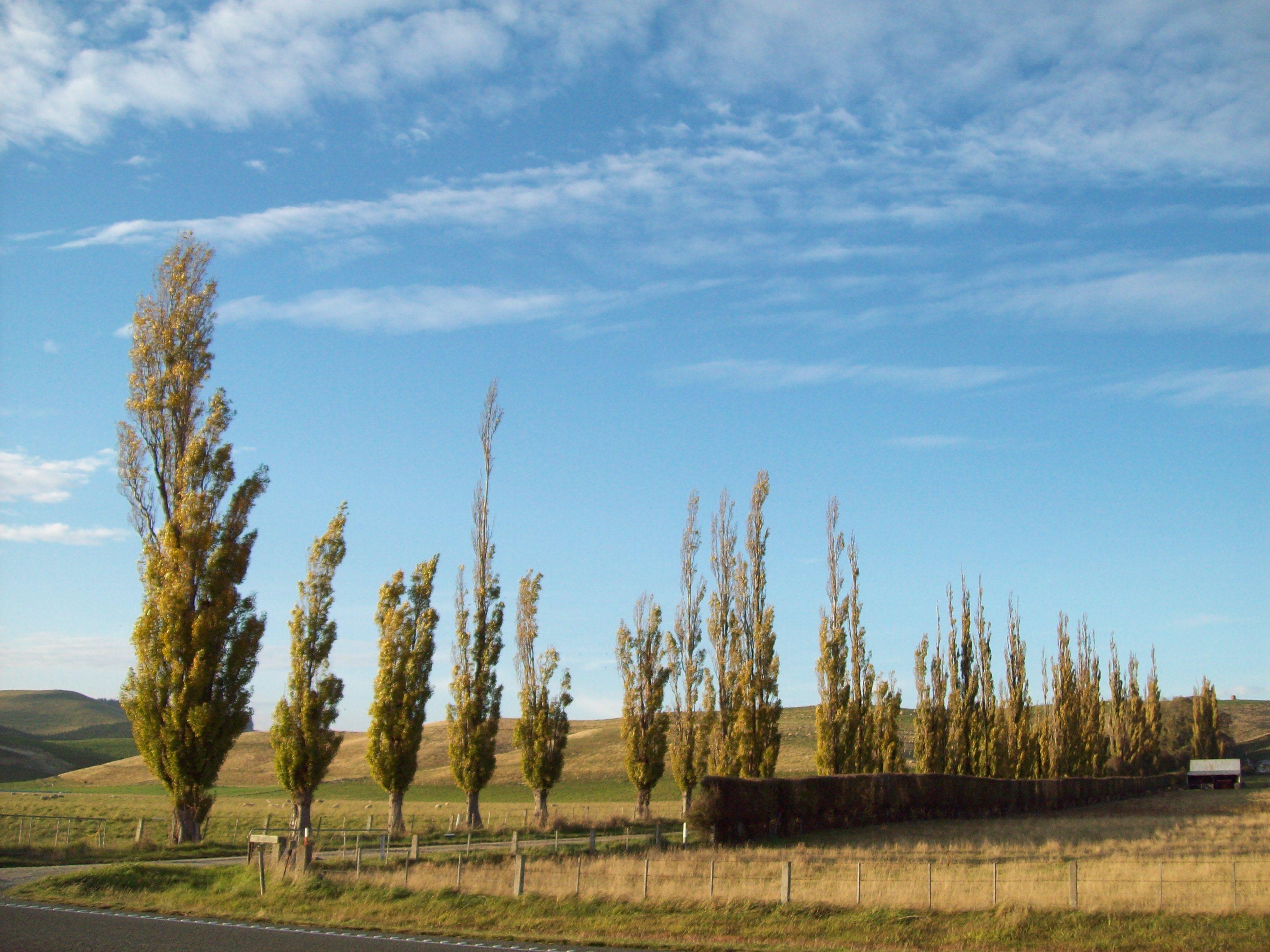 Otago- canterbury autumn / fall photo