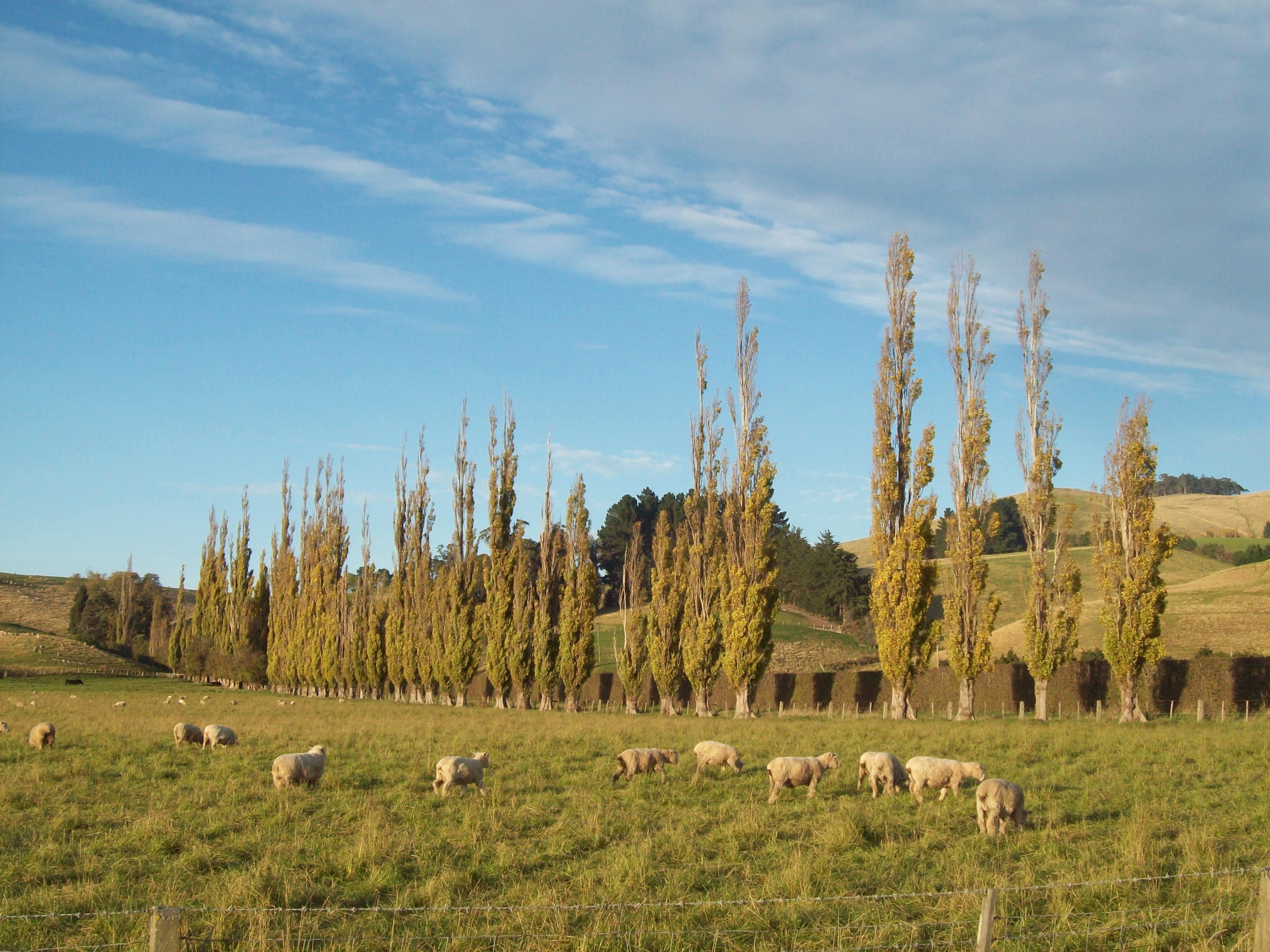 Otago- canterbury autumn photo