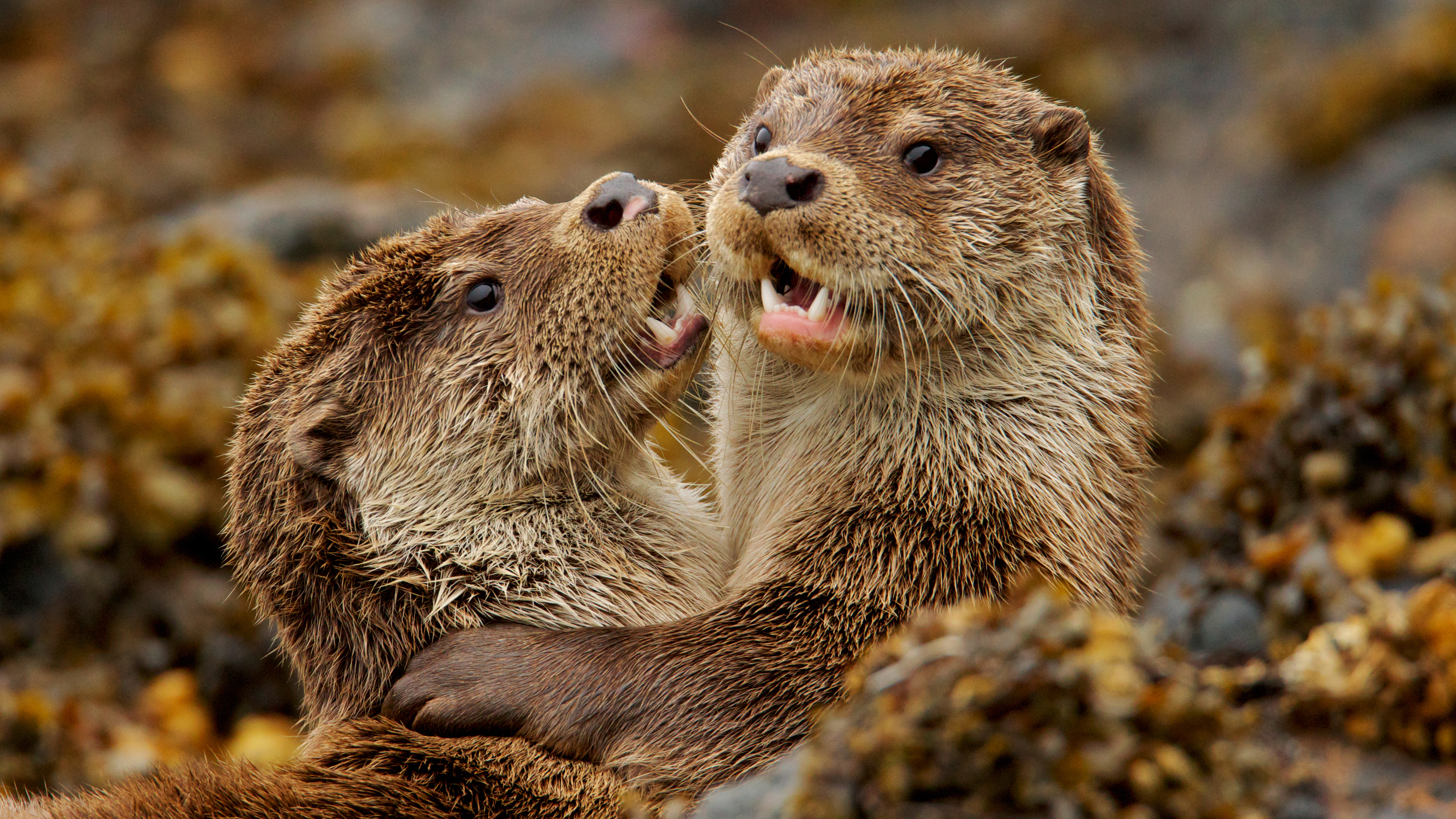 Charlie & the Curious Otters | About | Nature | PBS