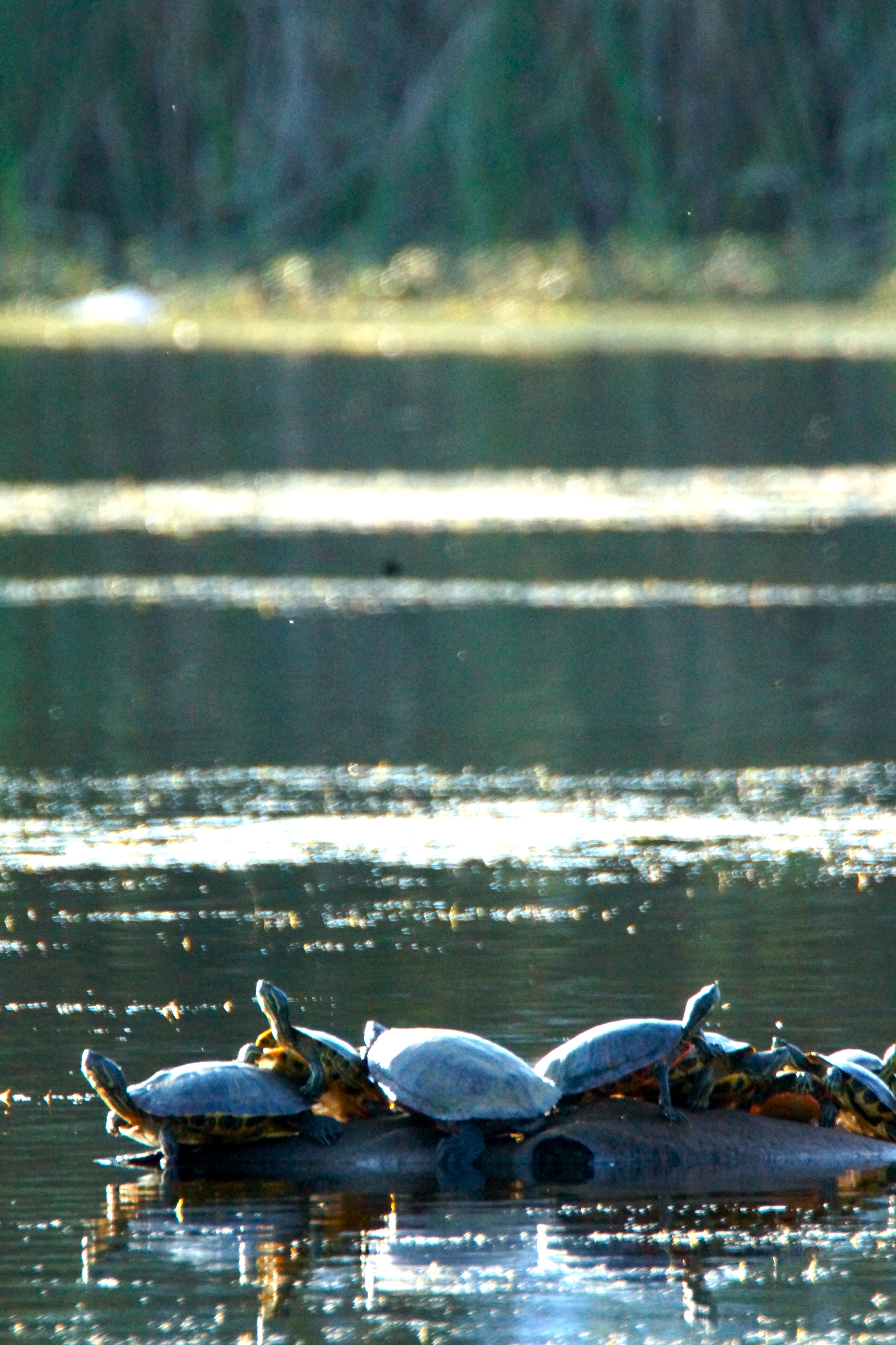 Overcrowding at Turtle Island - Gunners Lake Germantown MD, Boat, Outdoor, Vehicle, Water, HQ Photo