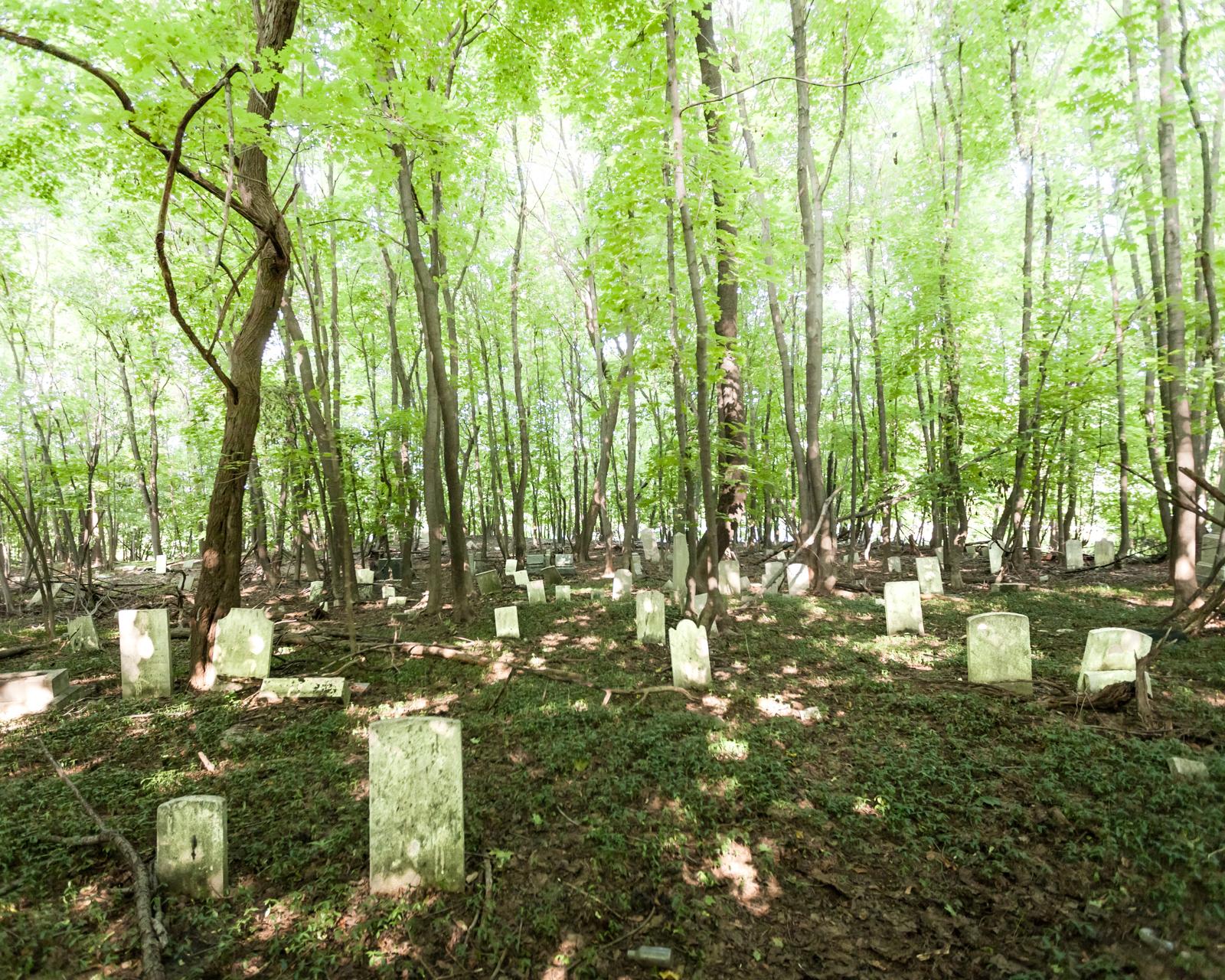 Overgrown | AbandonedNYC