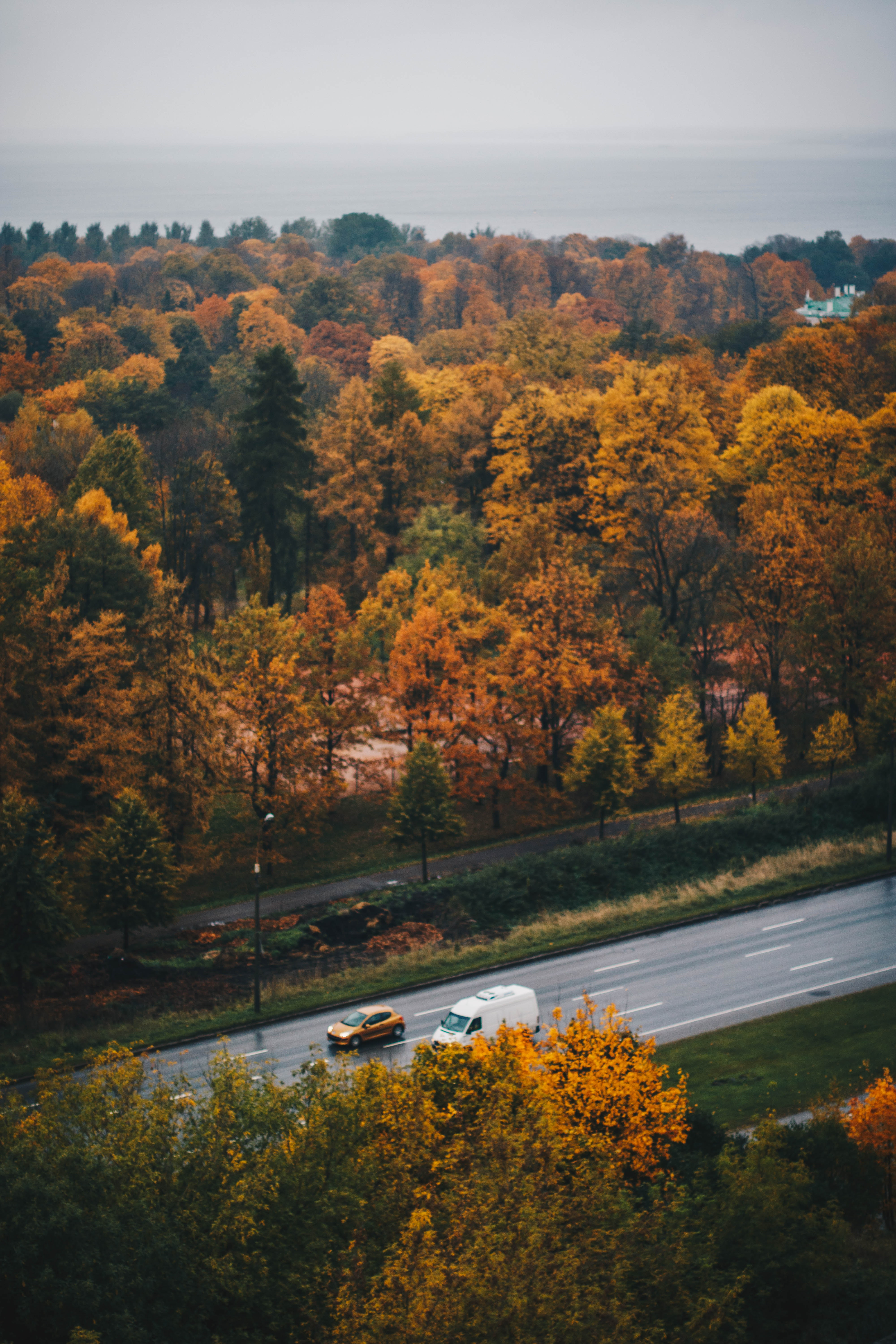 Overview of Brown Leaf Trees and Road, Aerial view, Outdoors, Vehicles, Trees, HQ Photo