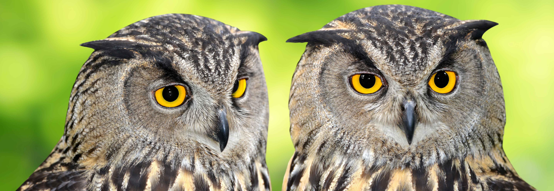 Owl Symbolism, Owl Totem, Owl Meaning, Owl Dreams, Owl Spirit Animal