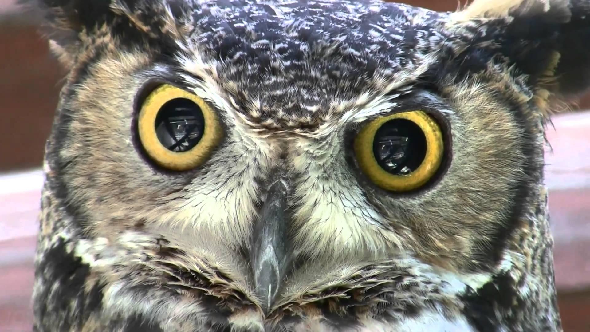Free photo: Owl Closeup - Bird, Close, Closeup - Free ...