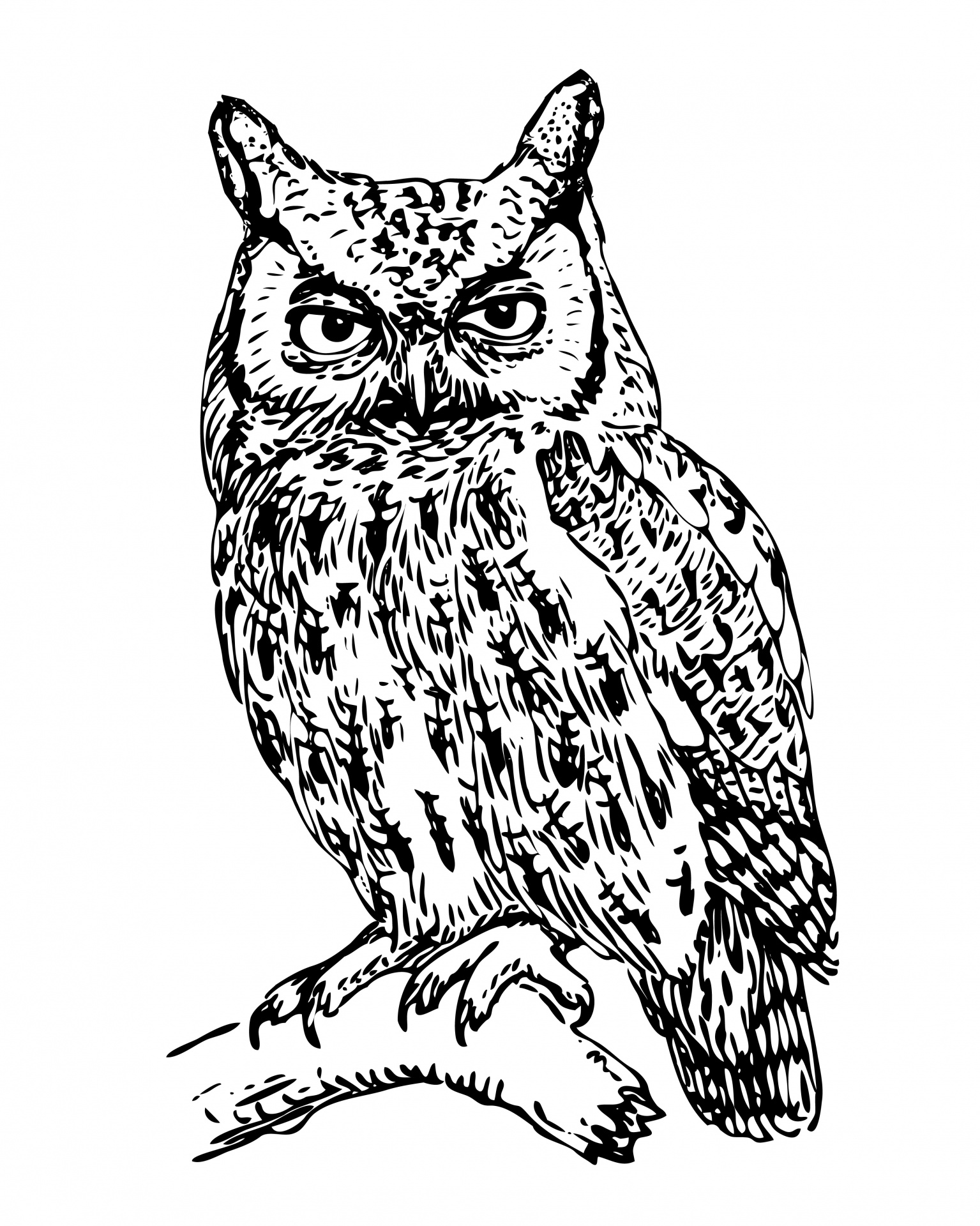 Owl illustration photo