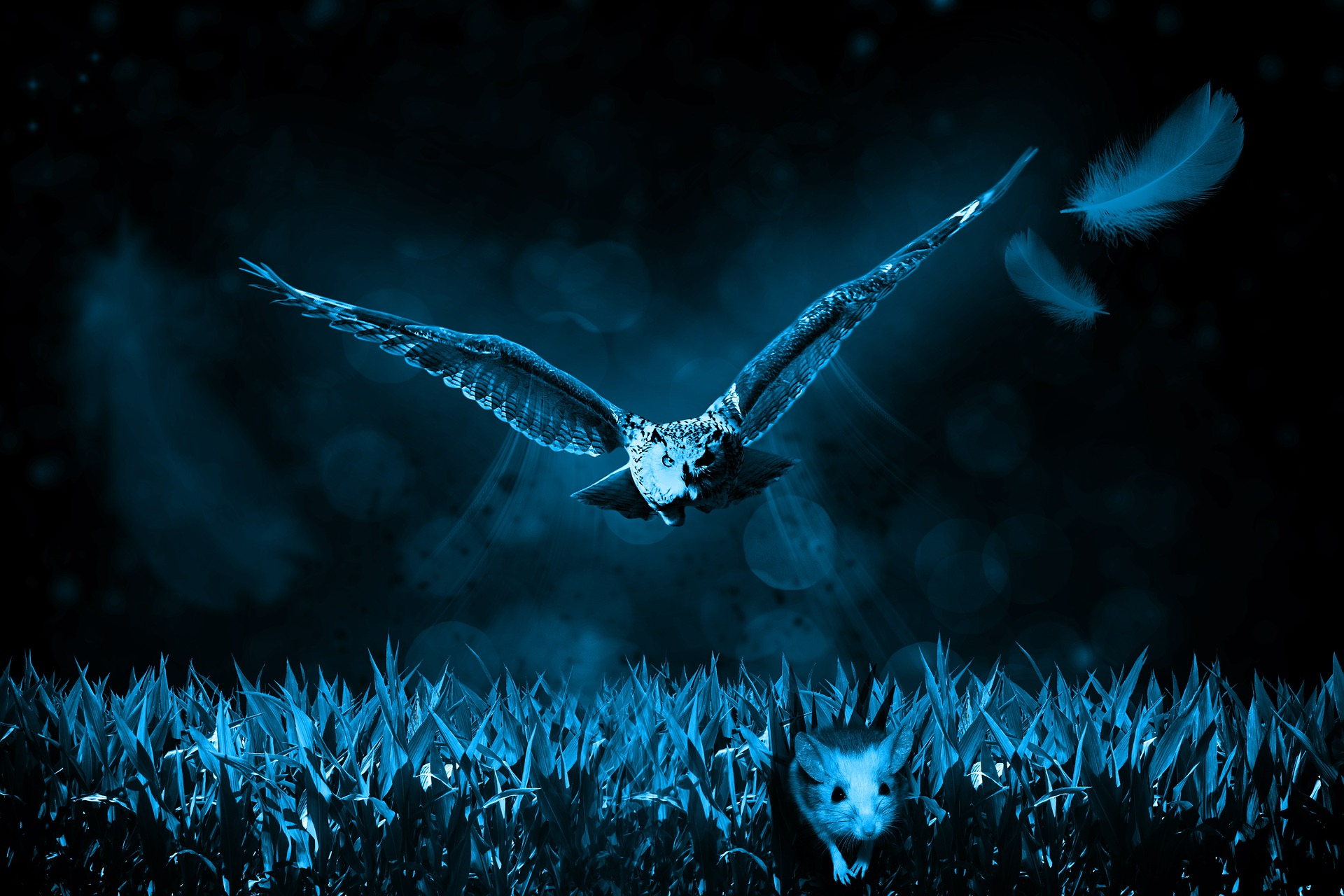 Owl Trying to Catch Mouse, Mouse, Owl, Wild, Hunt, HQ Photo