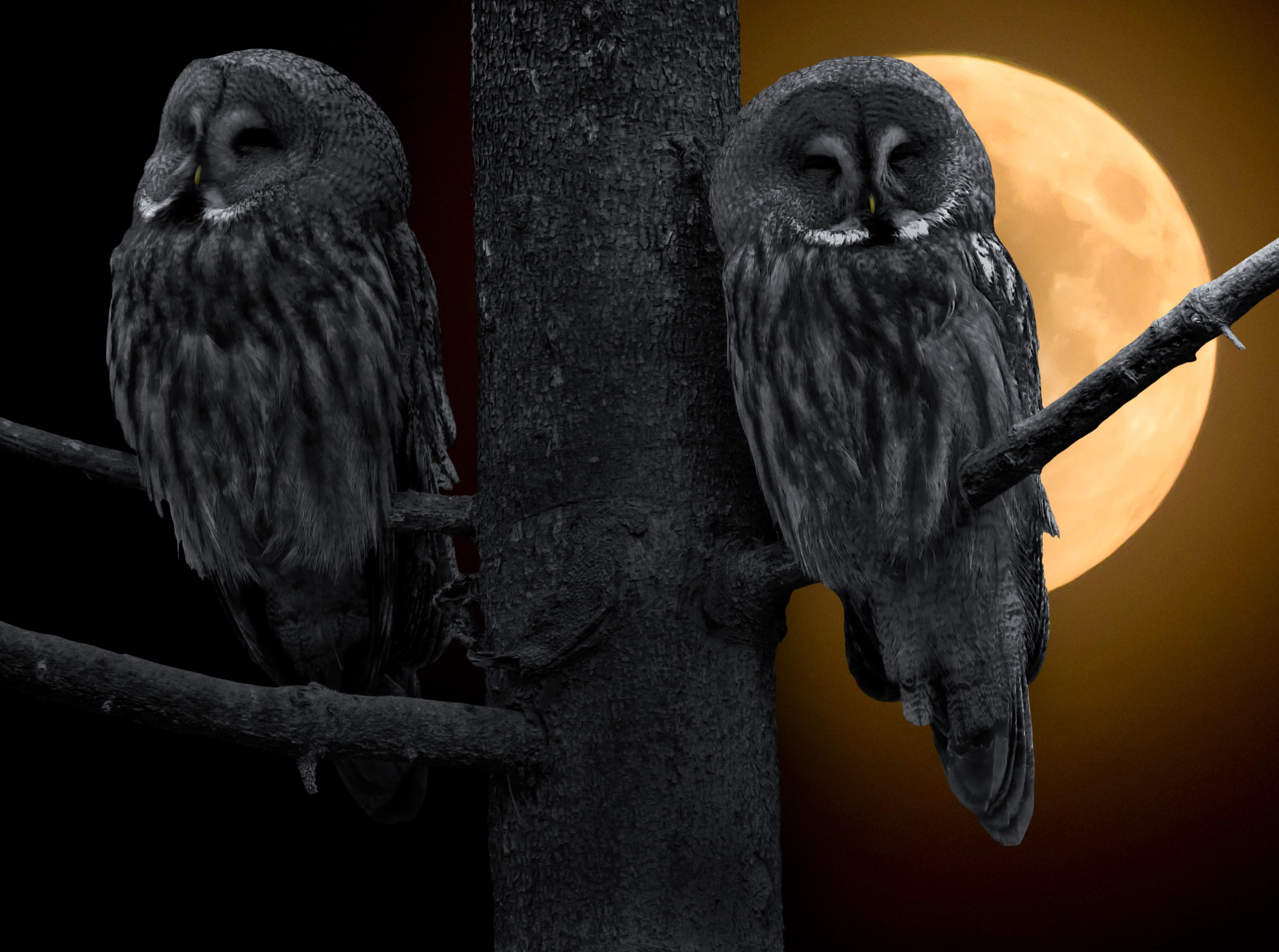 Owls on the tree photo