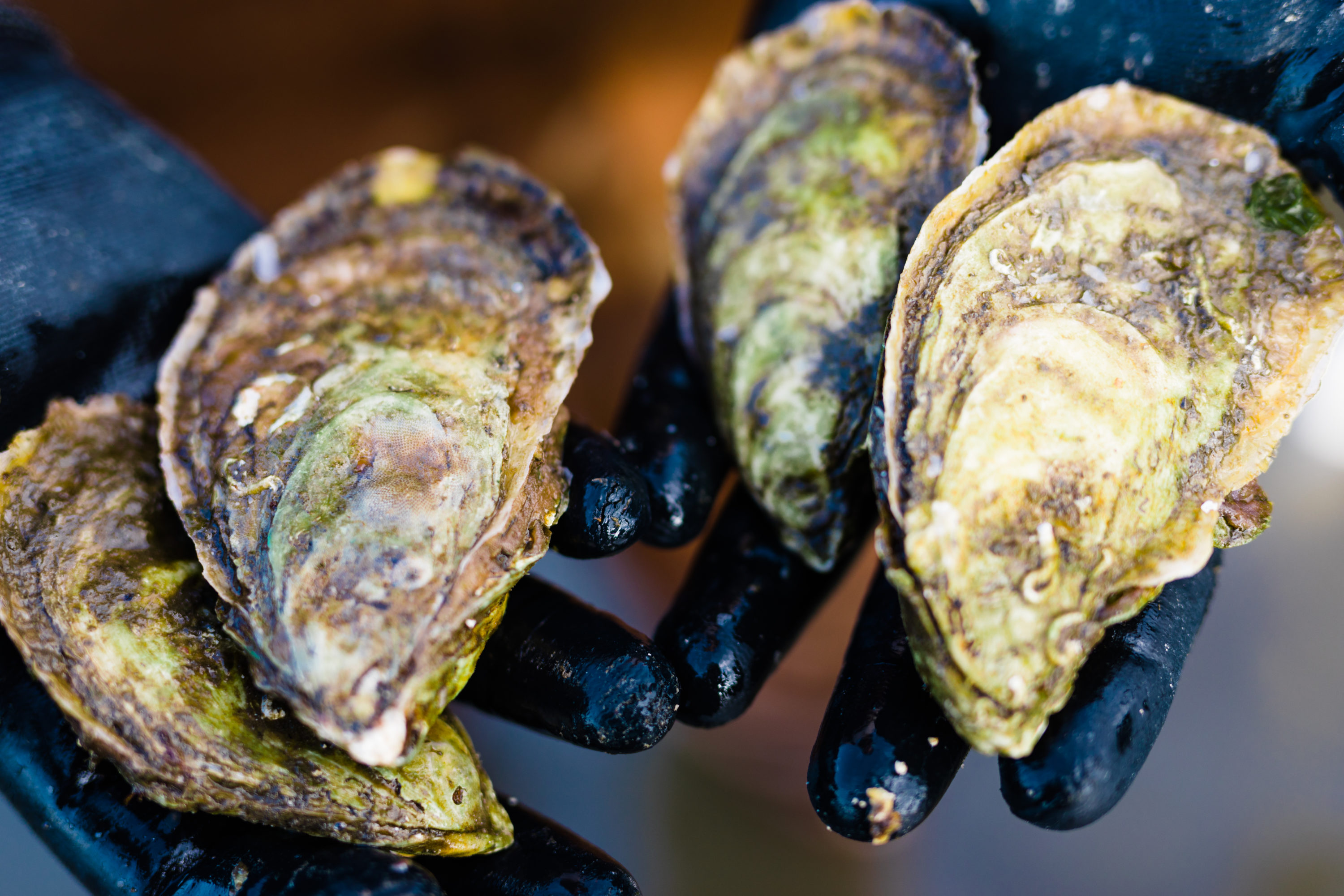 Farming Coastal Waters: Applied Research Supports Oyster Growers ...