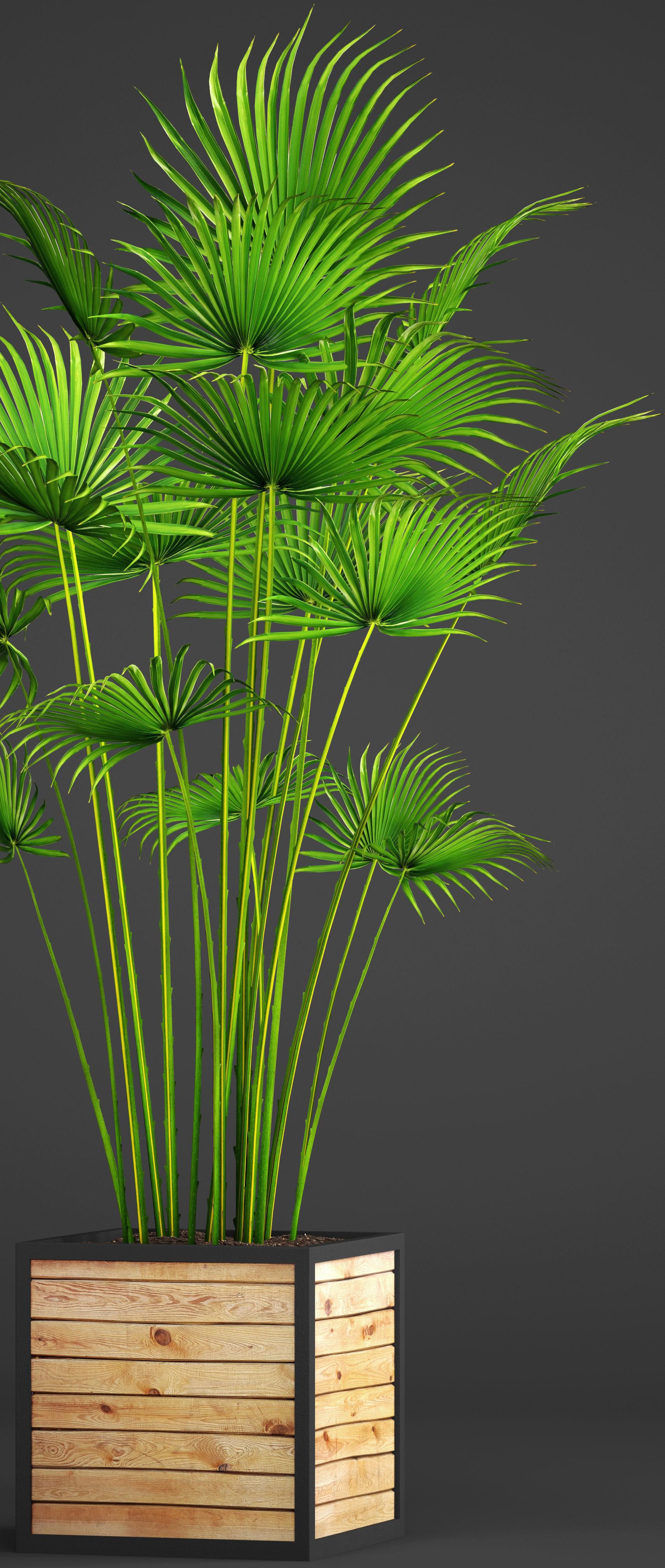 3D Palm bush   CGTrader