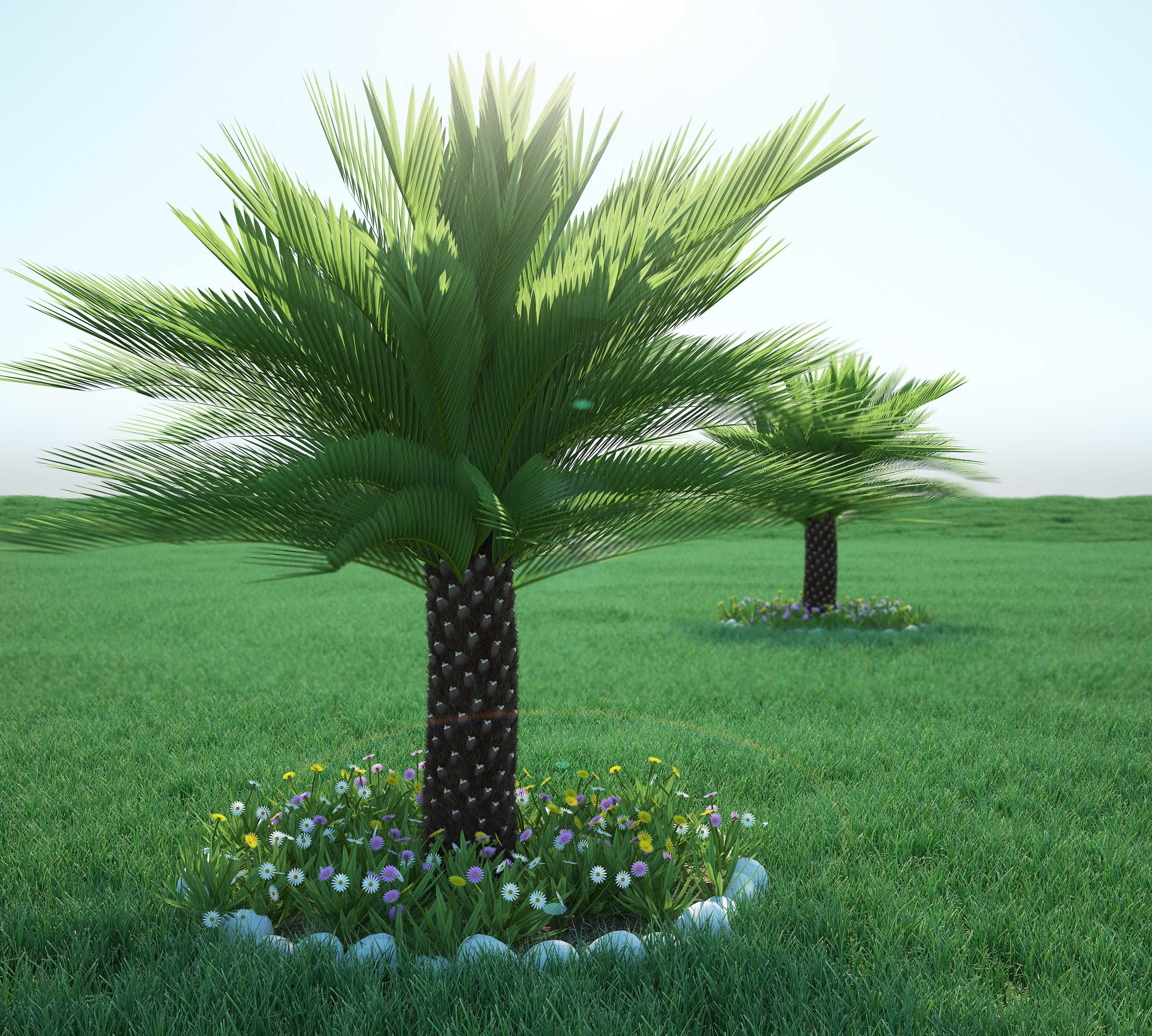 Palm bush 3D model MAX OBJ FBX MTL MAT