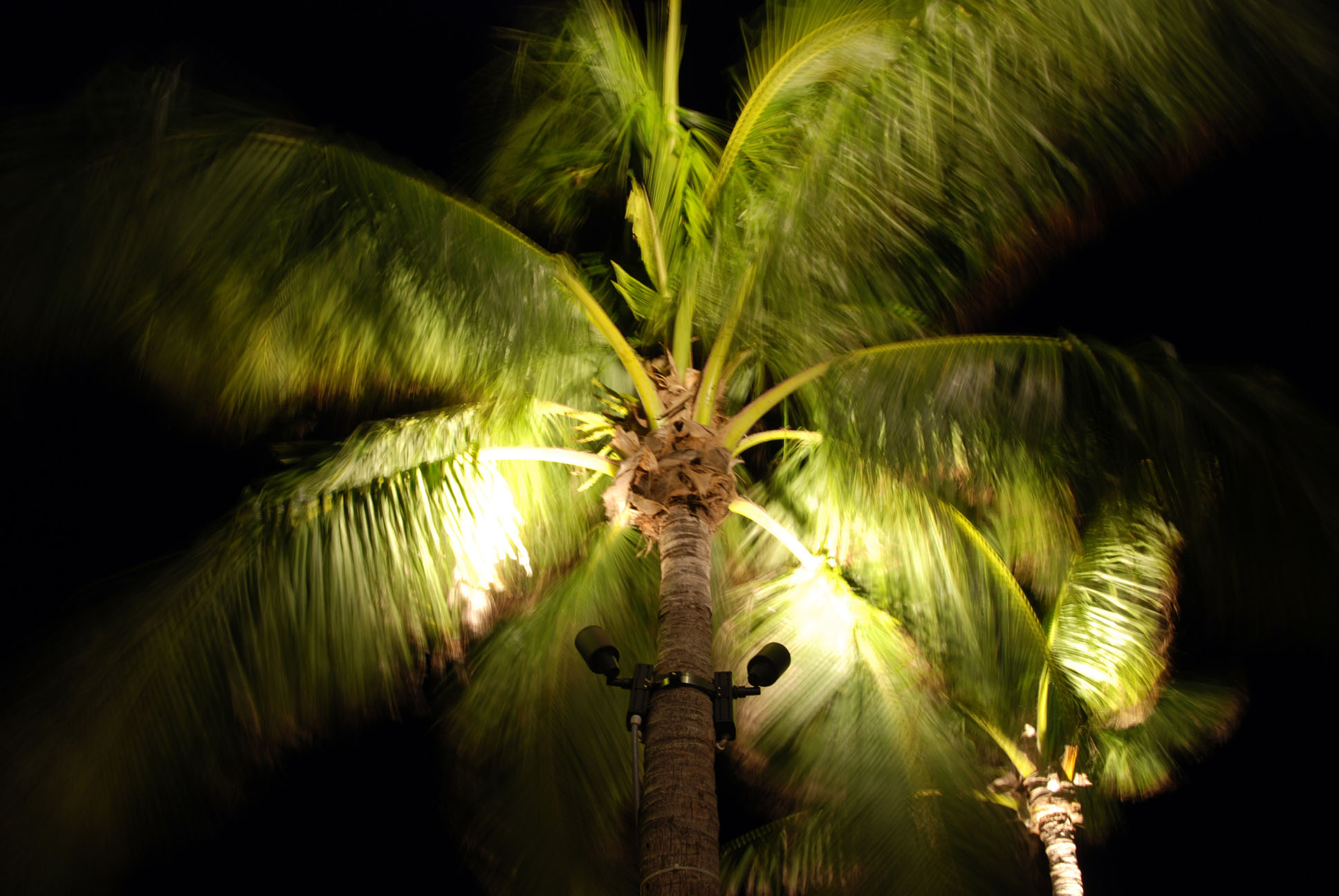 Palm in the wind, islamorada, florida photo