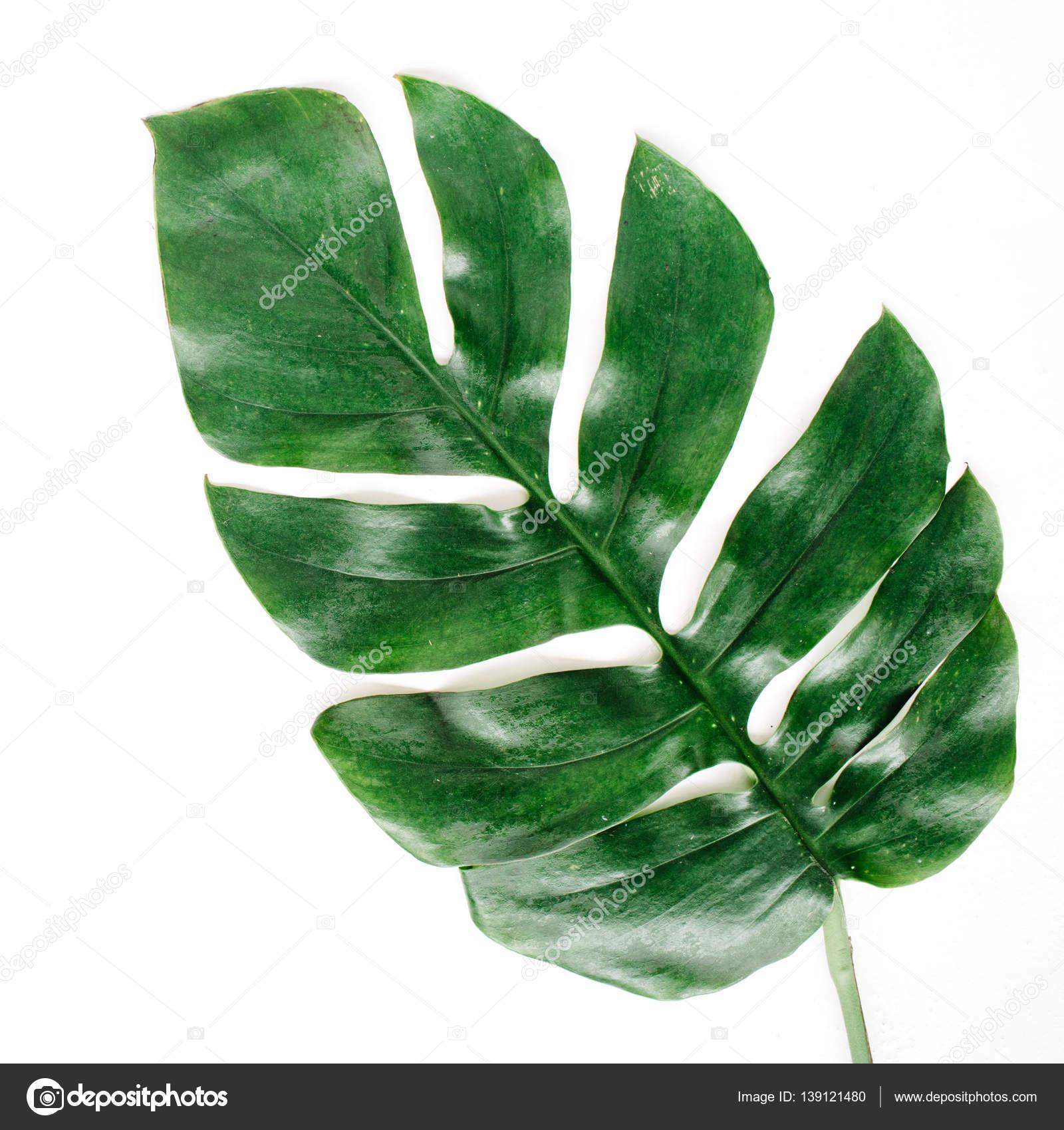 Free Photo Palm Leaf Palm Leaves Leaf Free Download