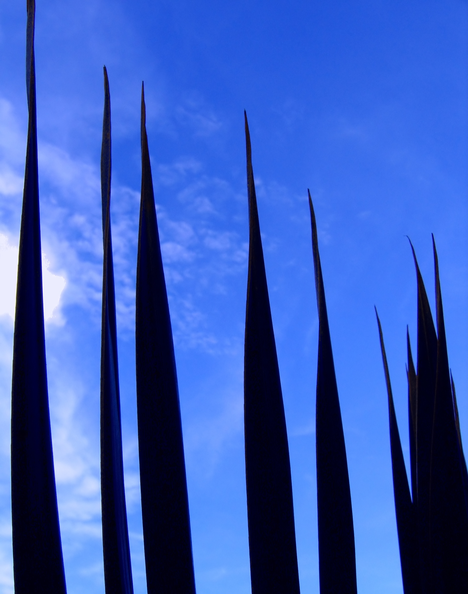 Palm Leaves against the Sky, Azure, Sharp, Vacation, Tropics, HQ Photo