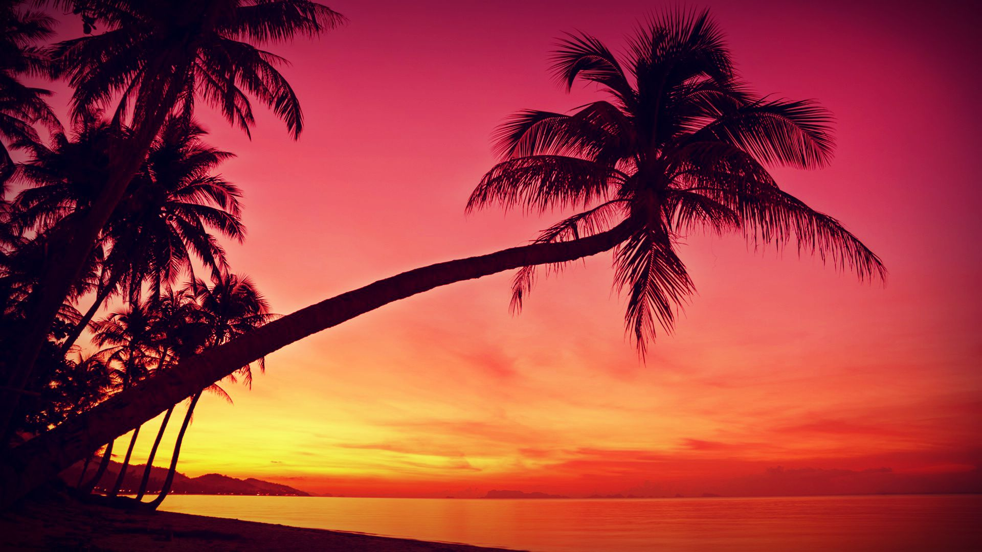 Beach Sunset With Palm Trees HD Wallpaper, Background Images