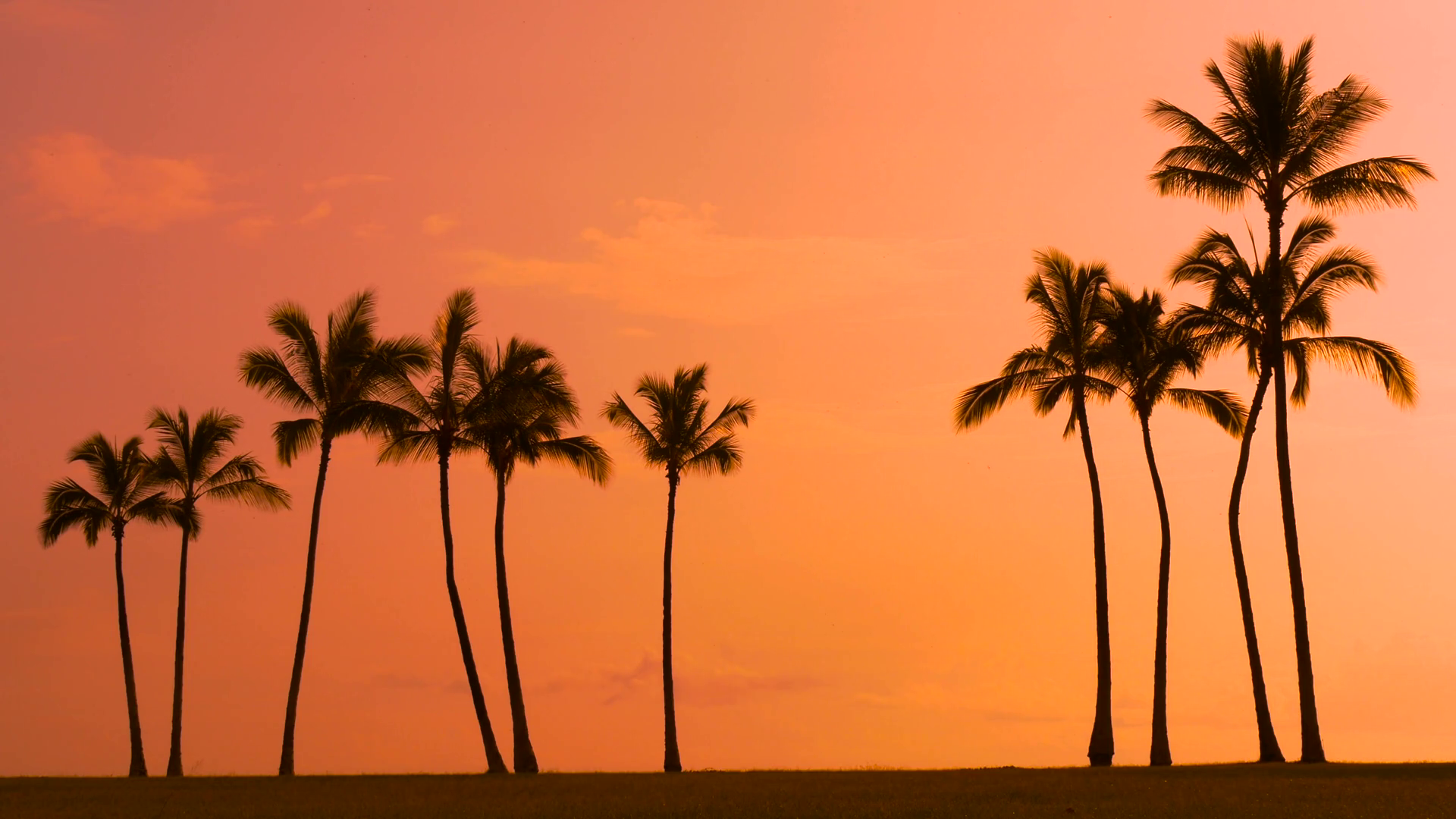 Tropical sunset sky with palm trees silhouette in Hawaii Stock Video ...