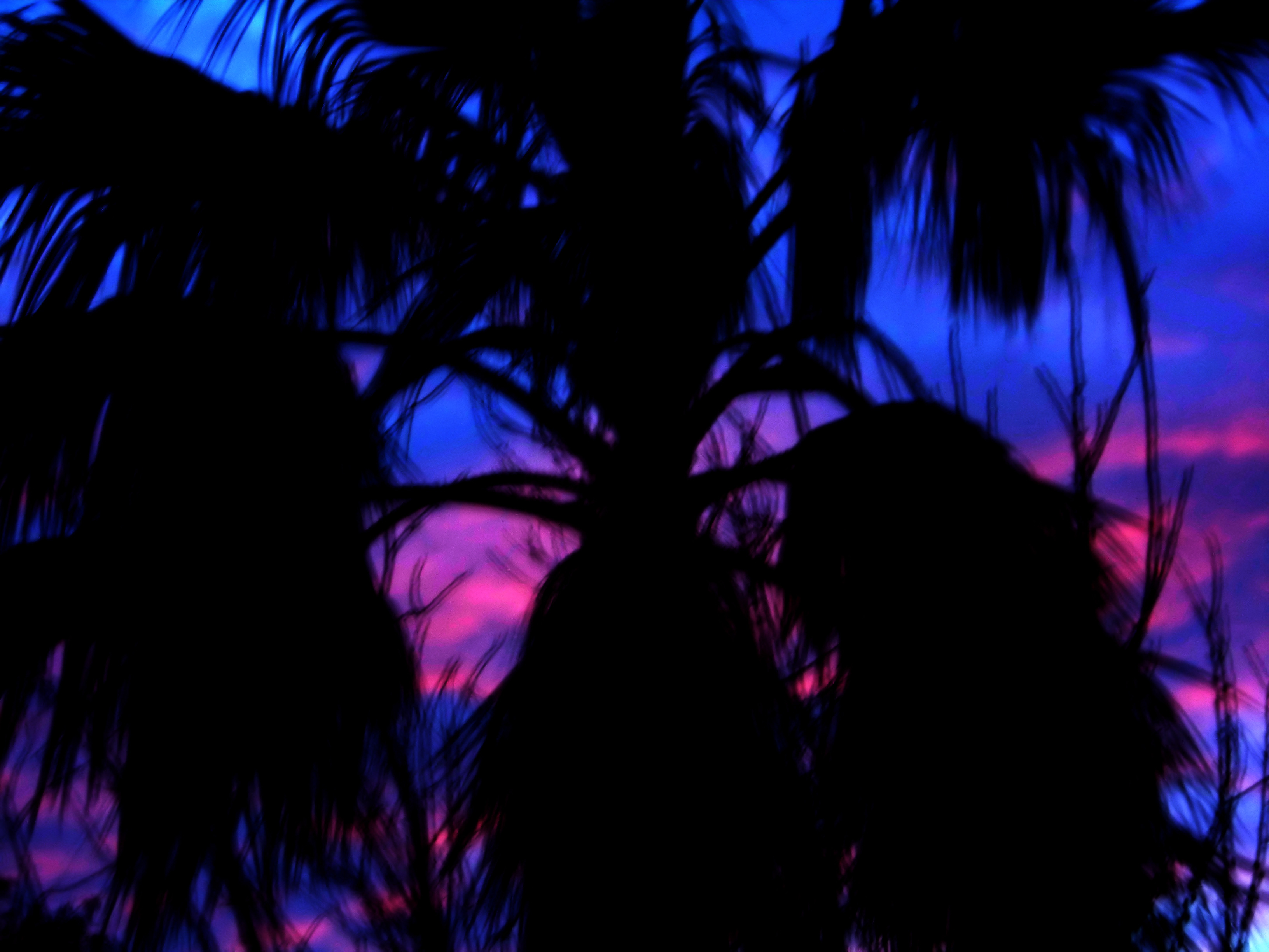Palm sunset, Black, Blue, Dark, Magenta, HQ Photo