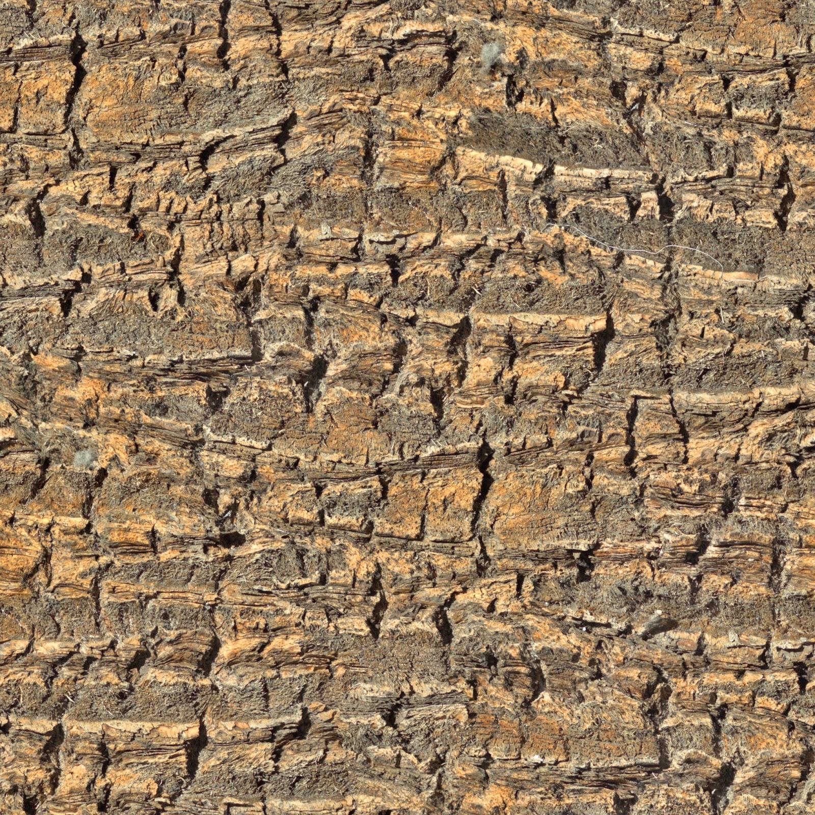 High Resolution Seamless Textures: Tree bark palm tree 2 seamless ...