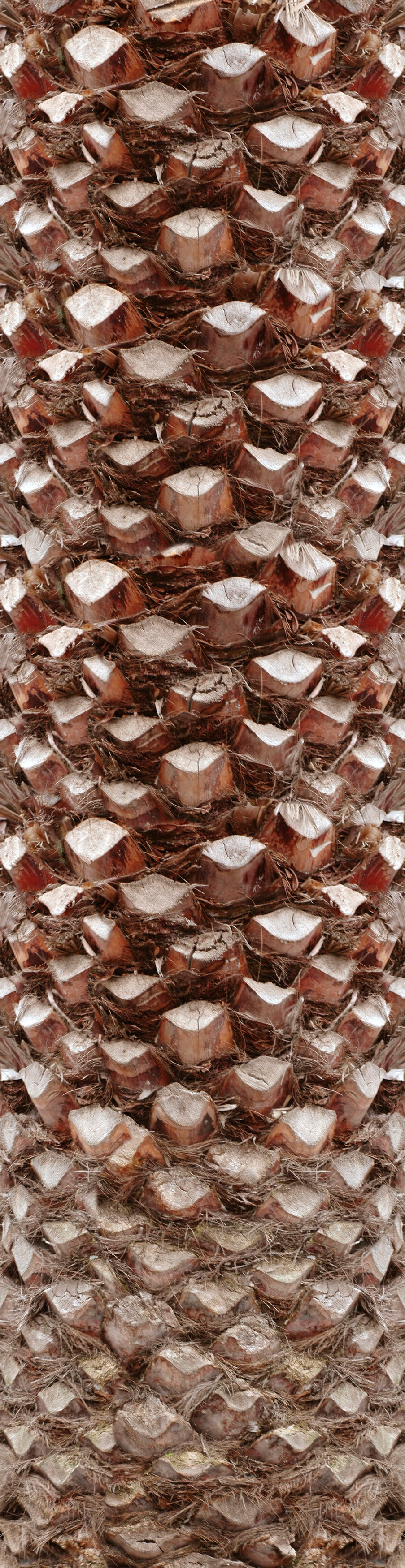 palm tree bark download free textures   a palm   Pinterest   Tree ...