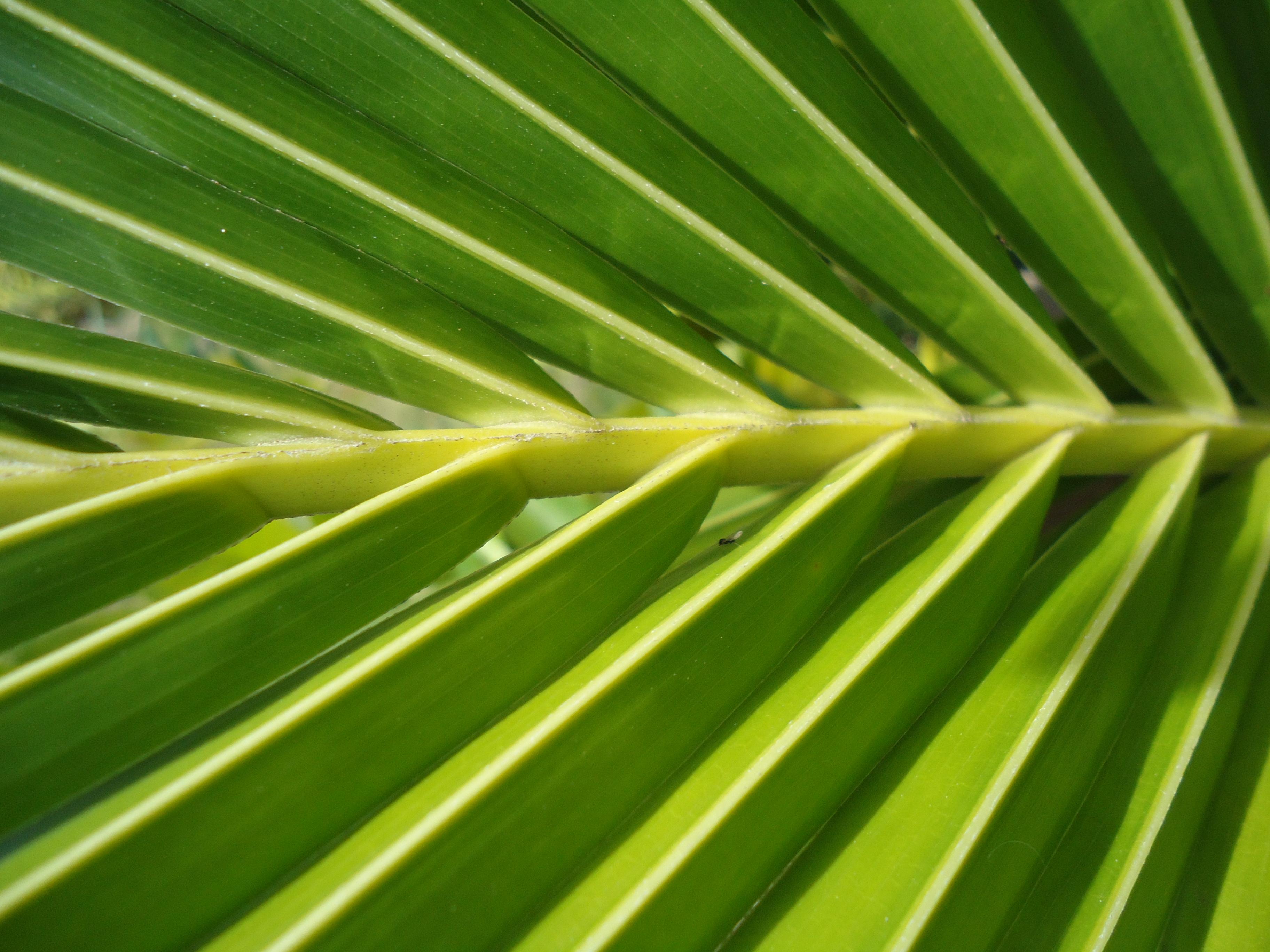 Palm Texture, Fresh, Green, Leaf, Nature, HQ Photo