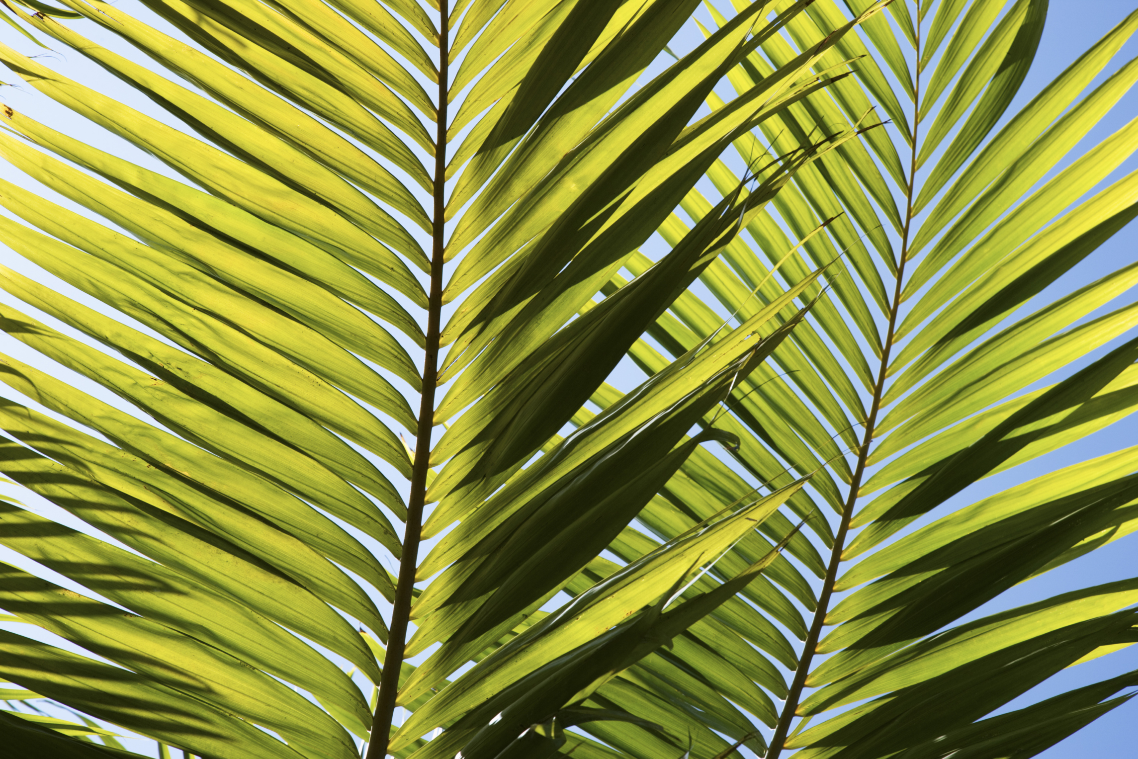 Pointed palm leaves photo
