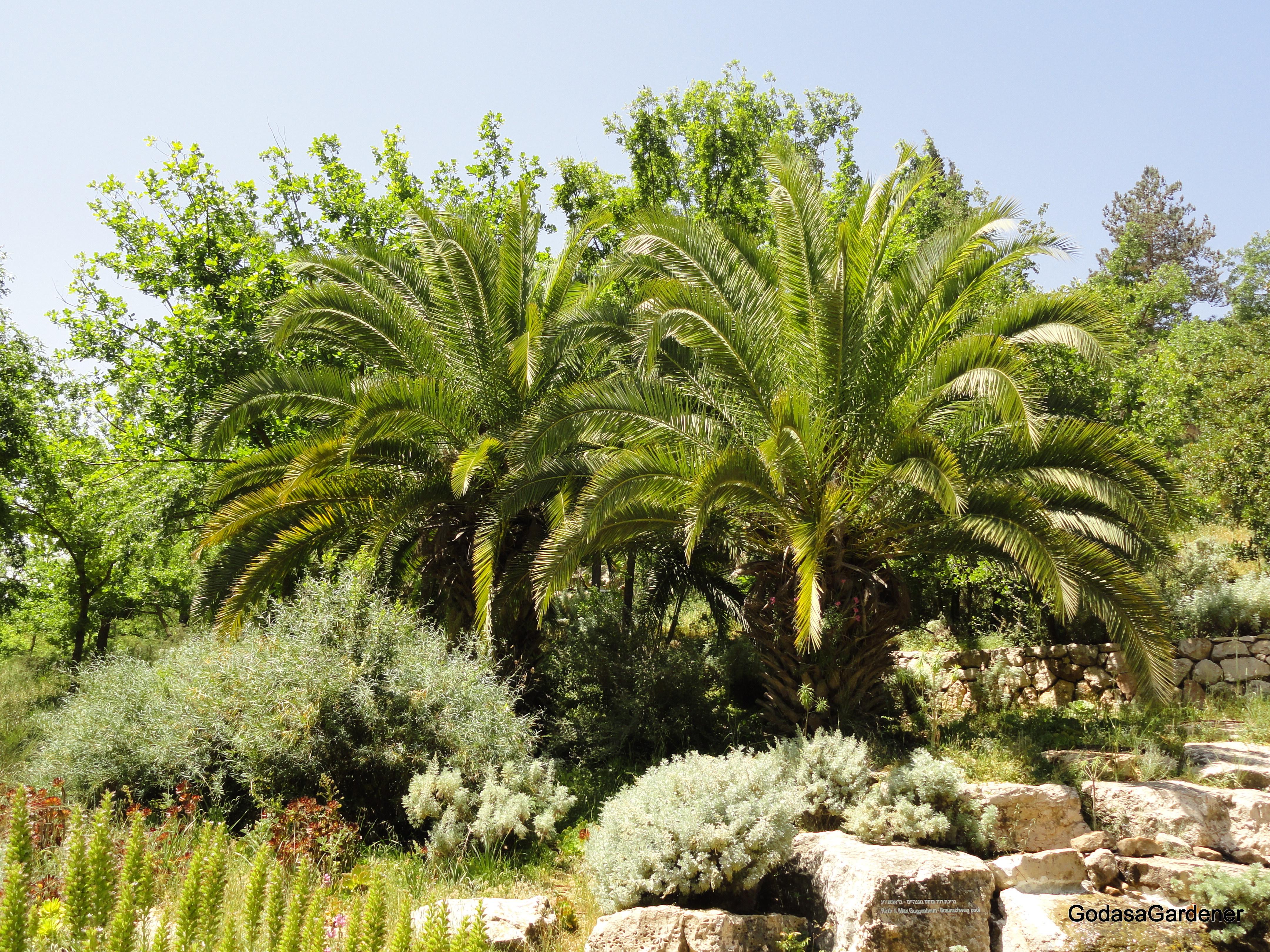 Deborah & the Palm Tree   God as a Gardener