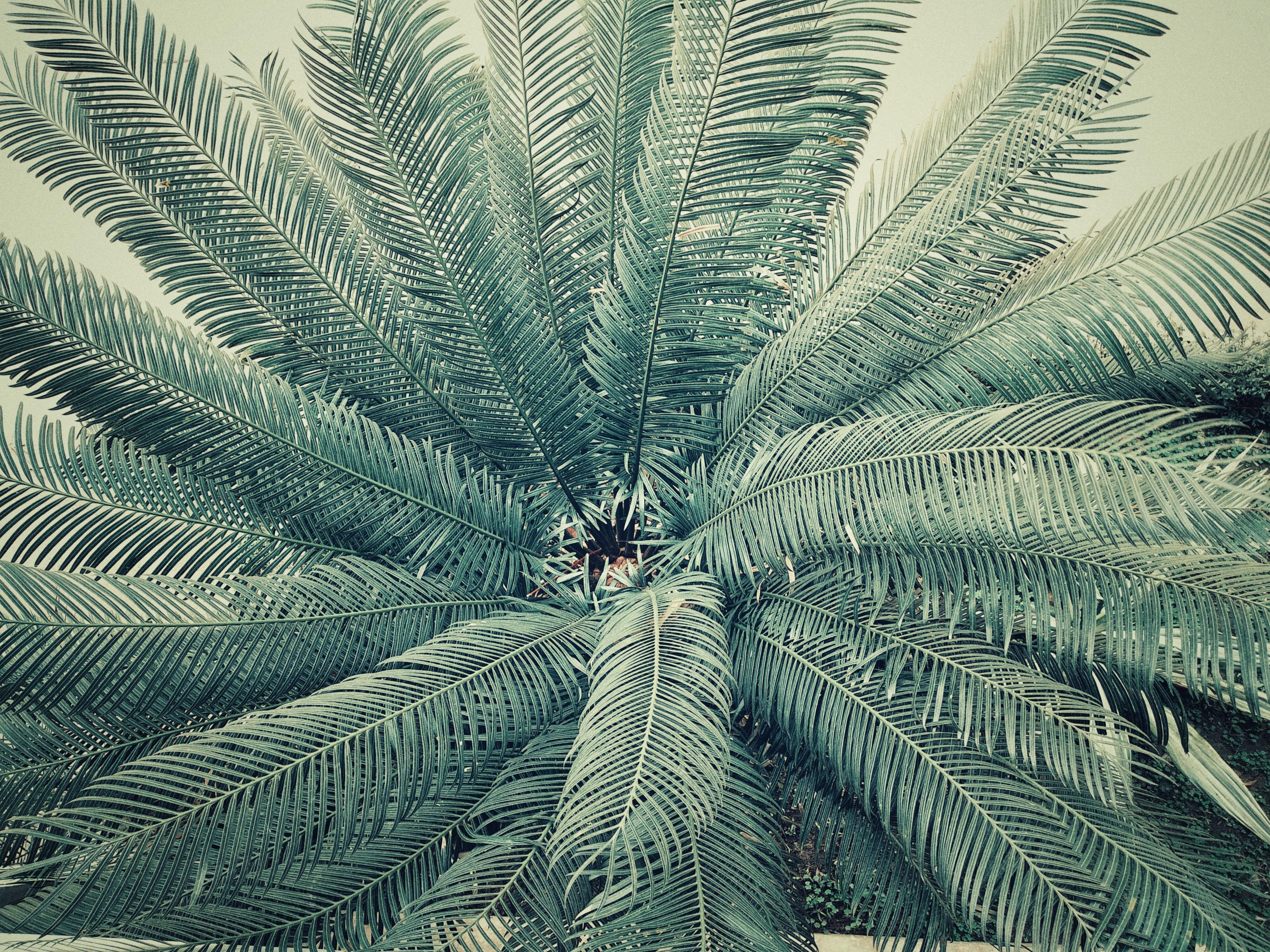 Palm Tree, Abstract, Palm, Tree, Travel, HQ Photo