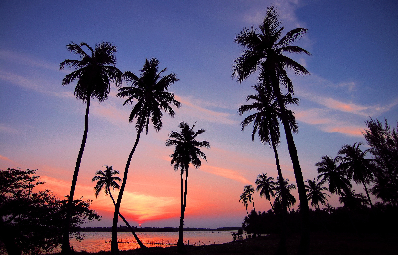 1000+ Amazing Palm Tree Photos