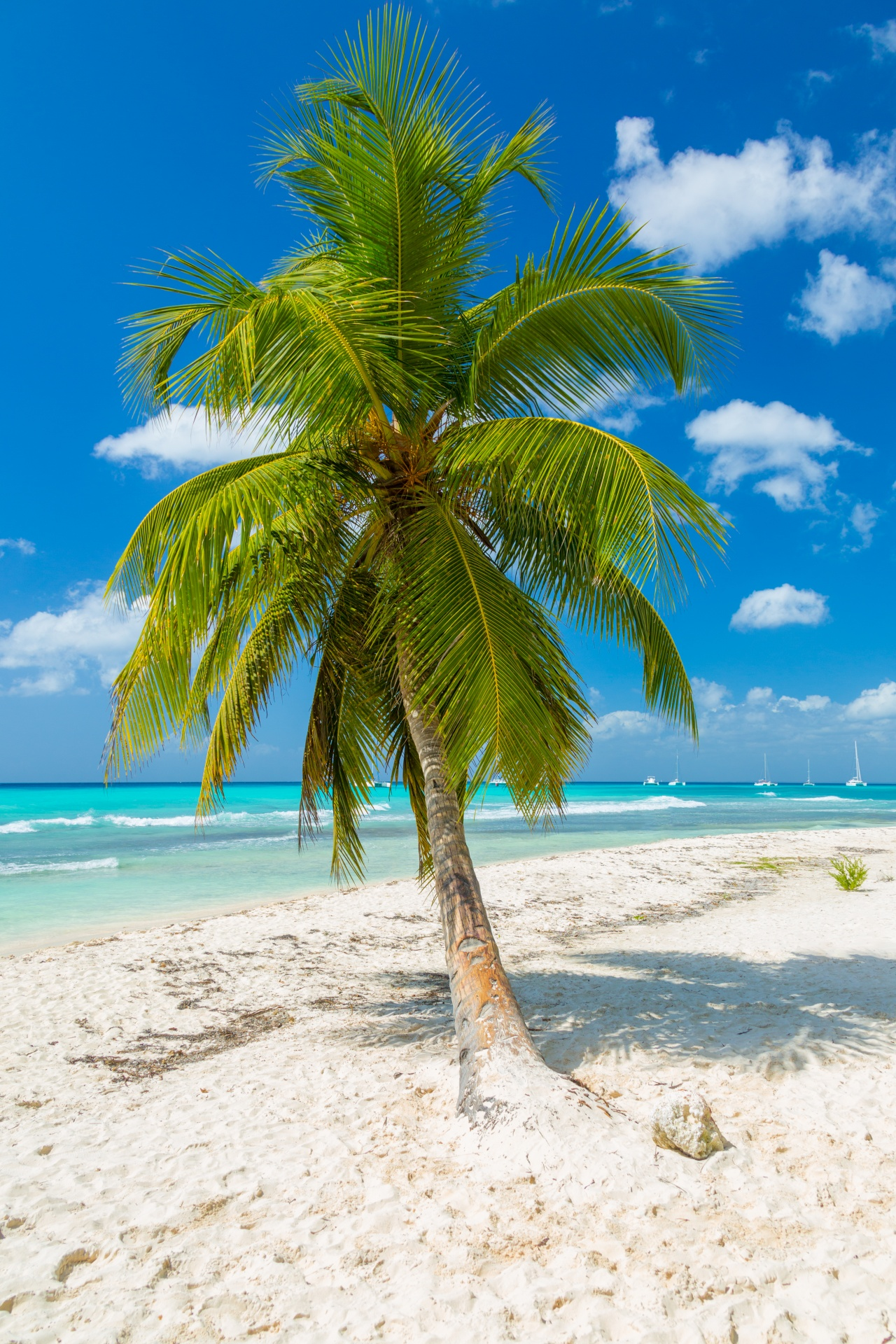 Tropical Palm Trees Free Stock Photo - Public Domain Pictures