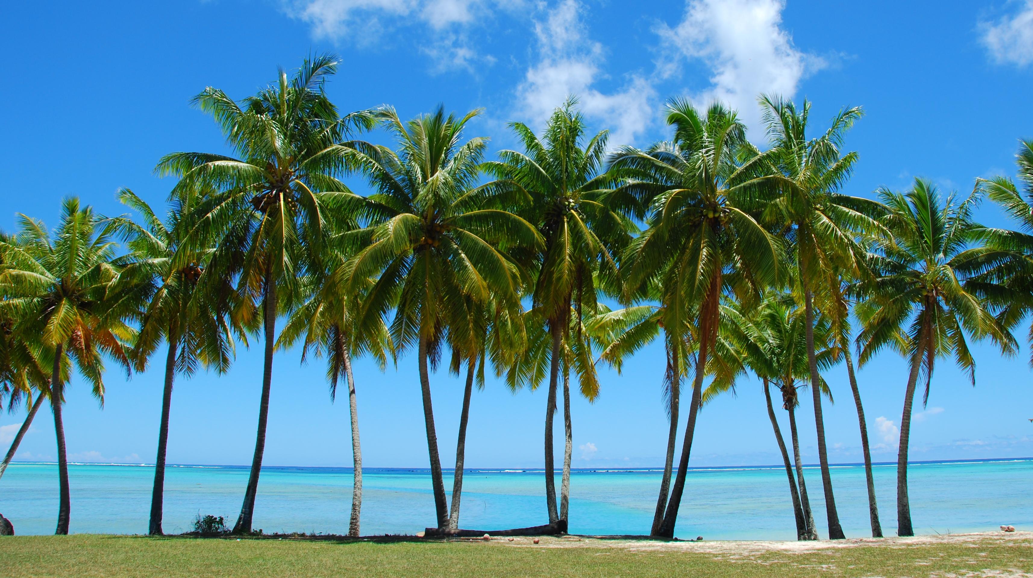 How Fast Do Palm Trees Grow? | The Tree Center™
