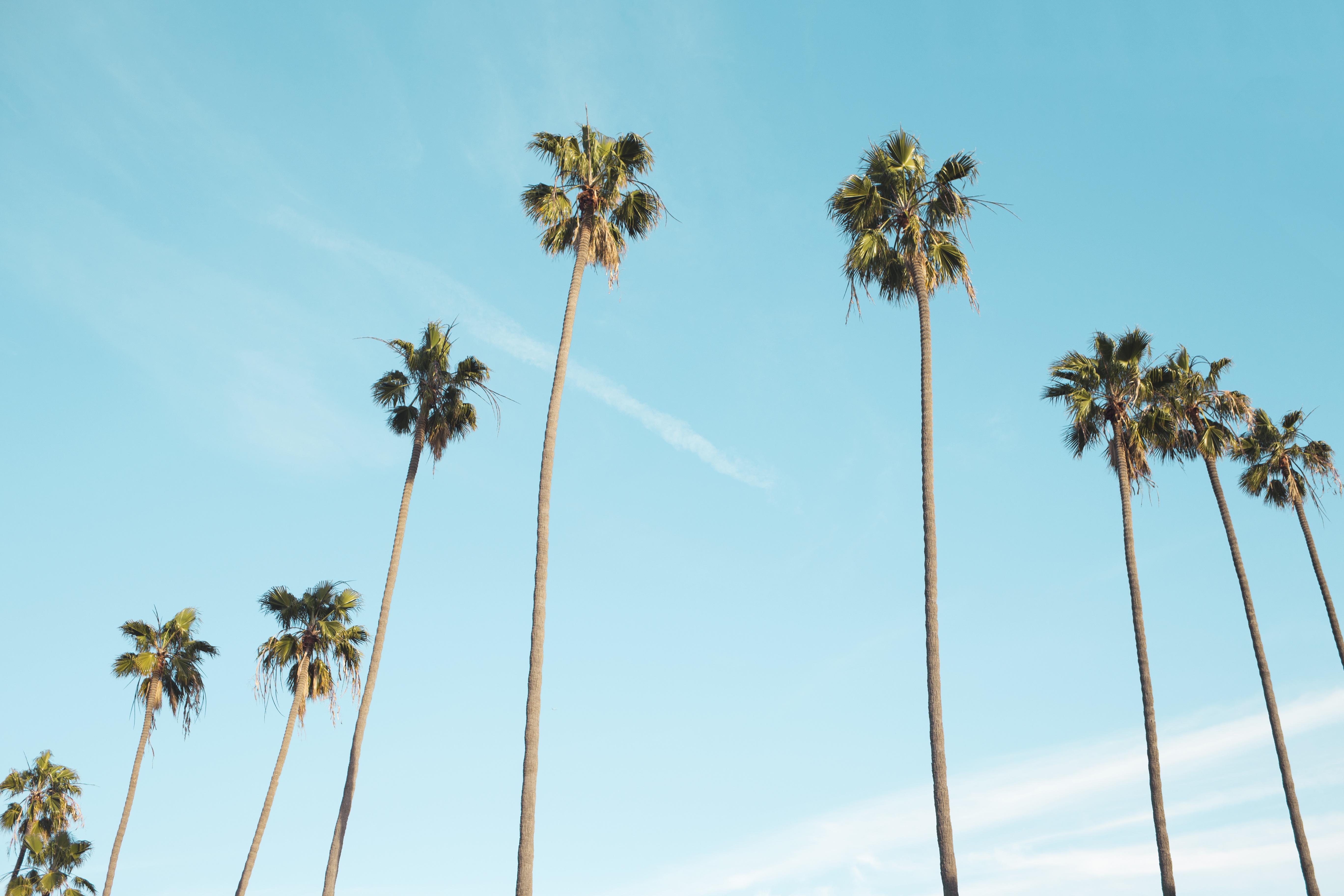 free photo palm trees tree wood sky free download jooinn