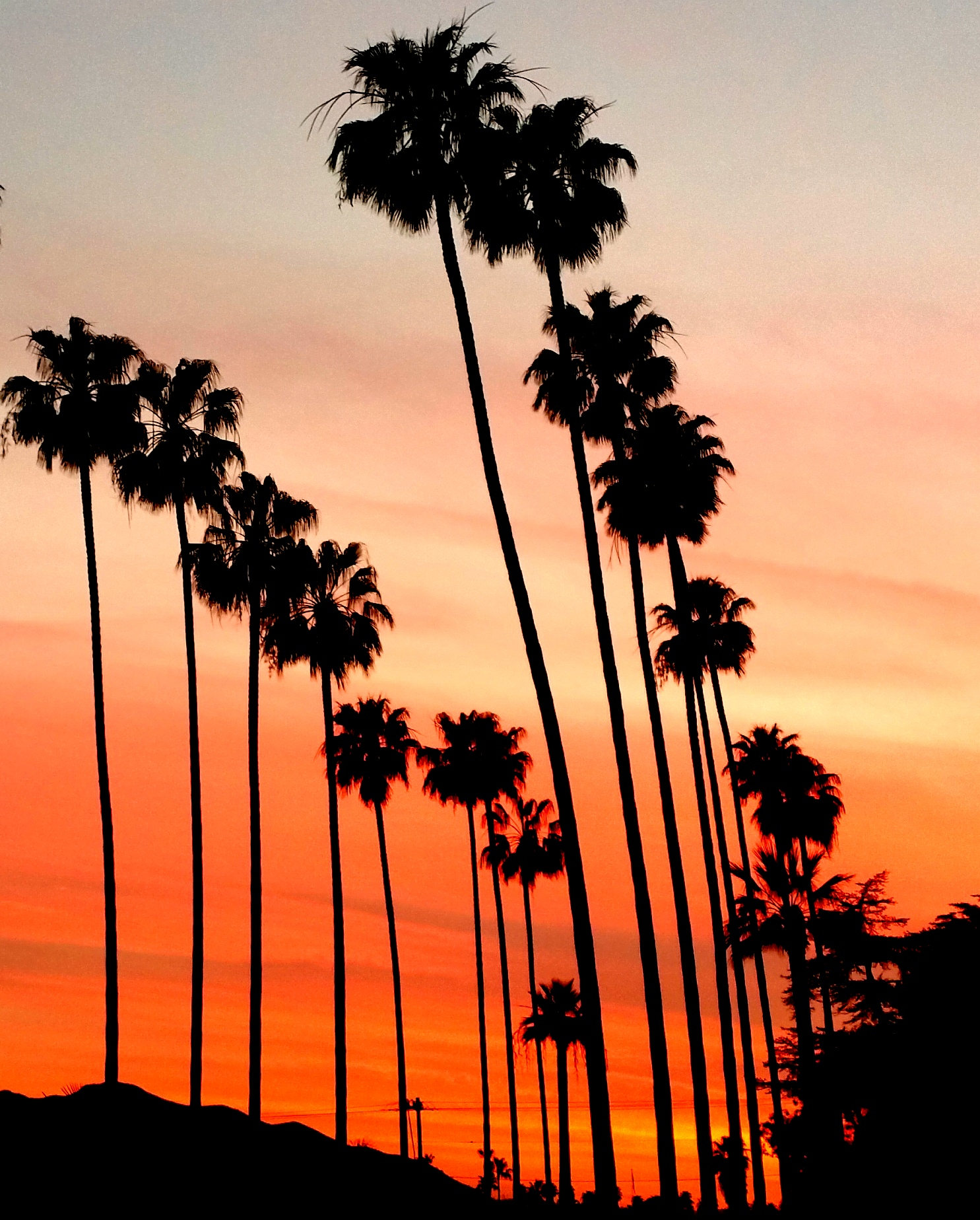 Palm Trees and Sunset Photography in LA California. Los