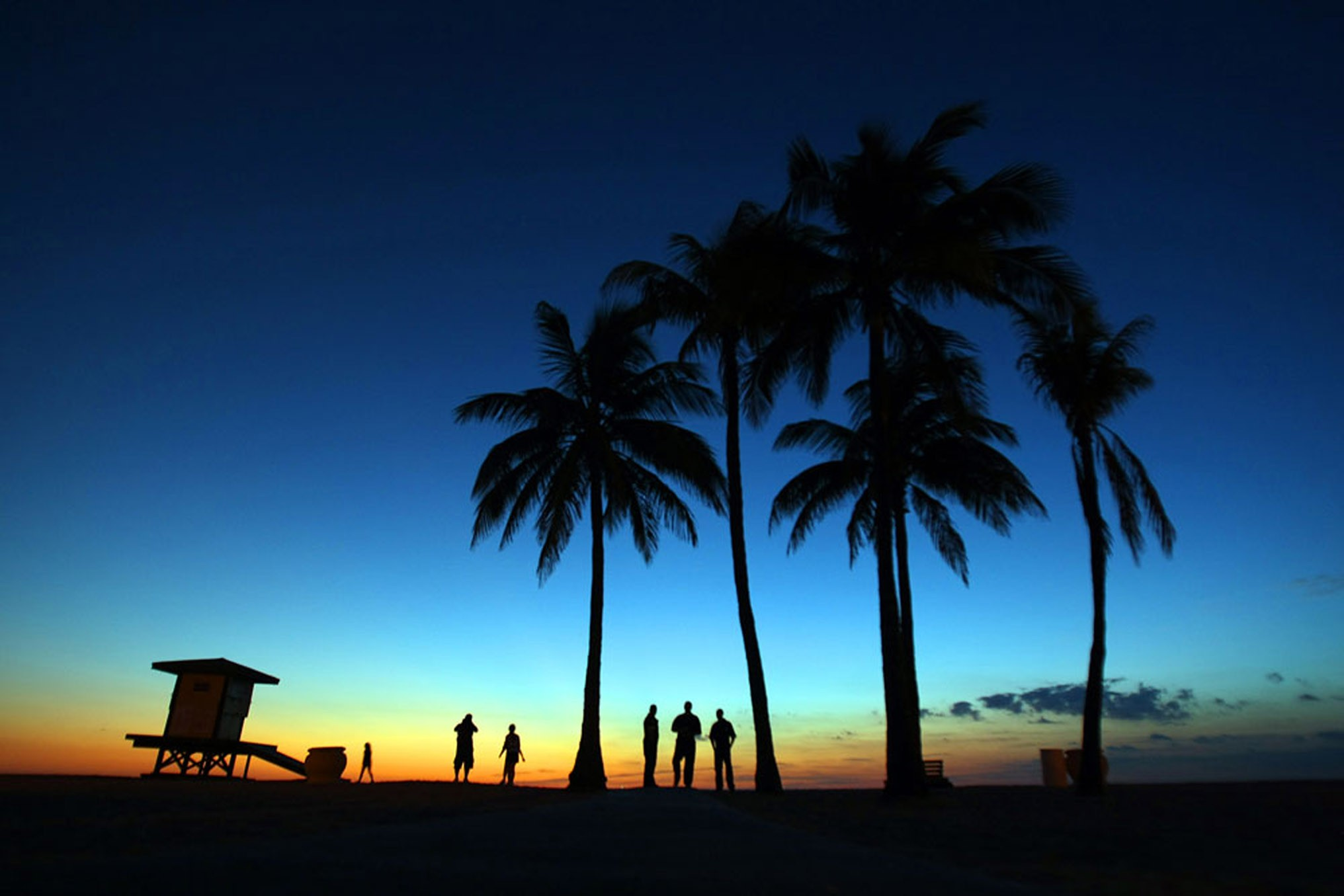 Sunrise & Sunset: Beach Palm Trees | Sun Sentinel Store