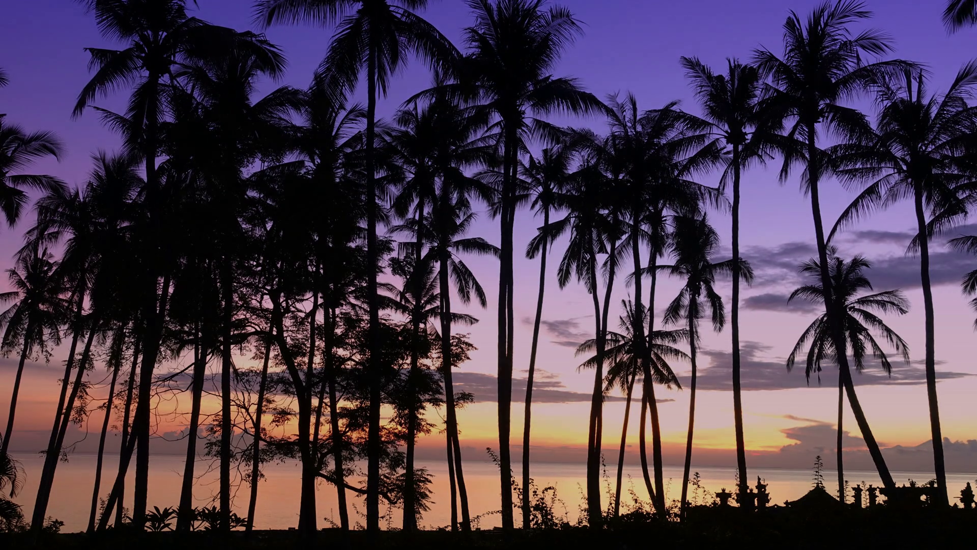 free photo palm trees sky trees palm free download jooinn