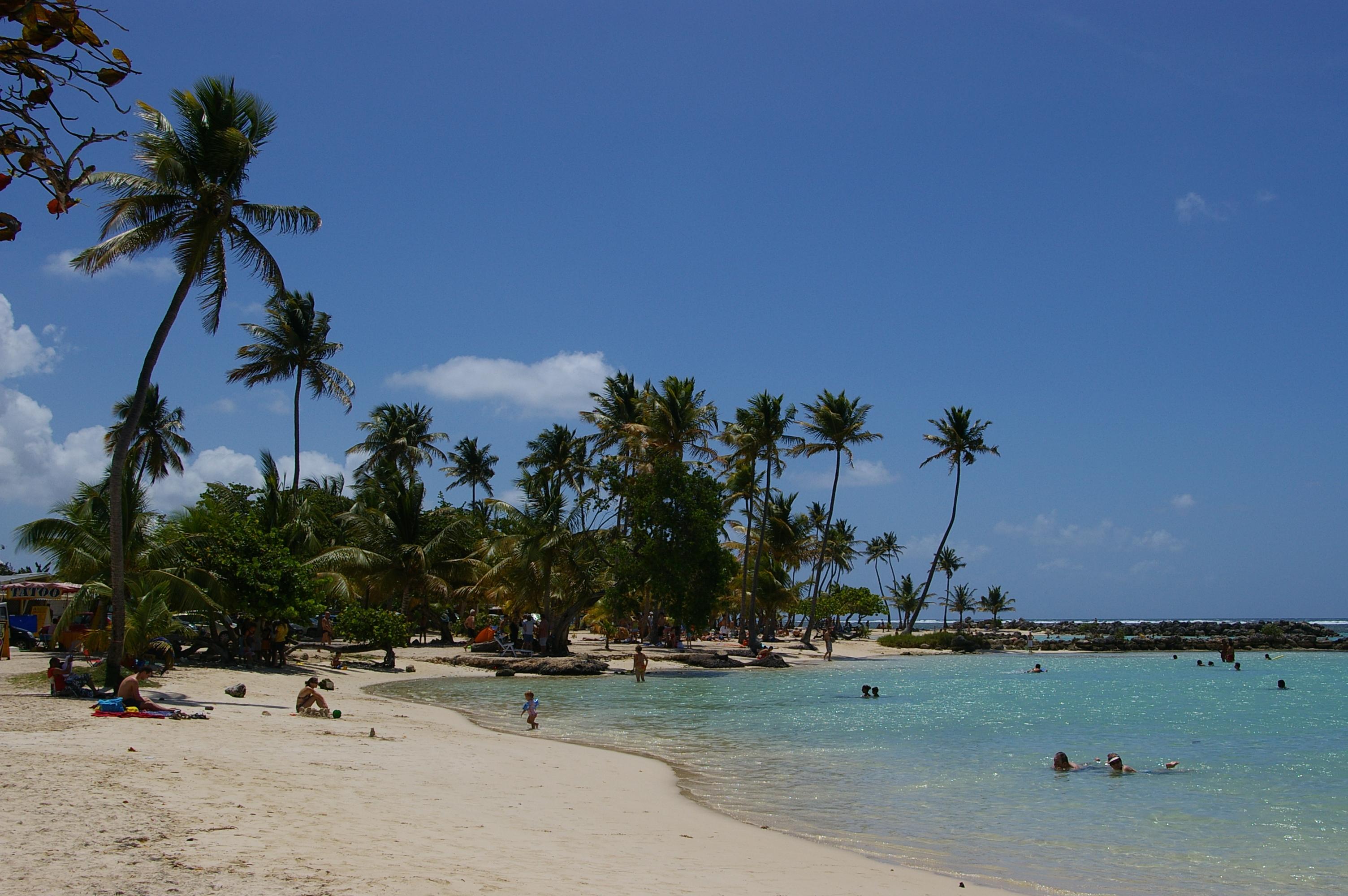 Palm trees photo