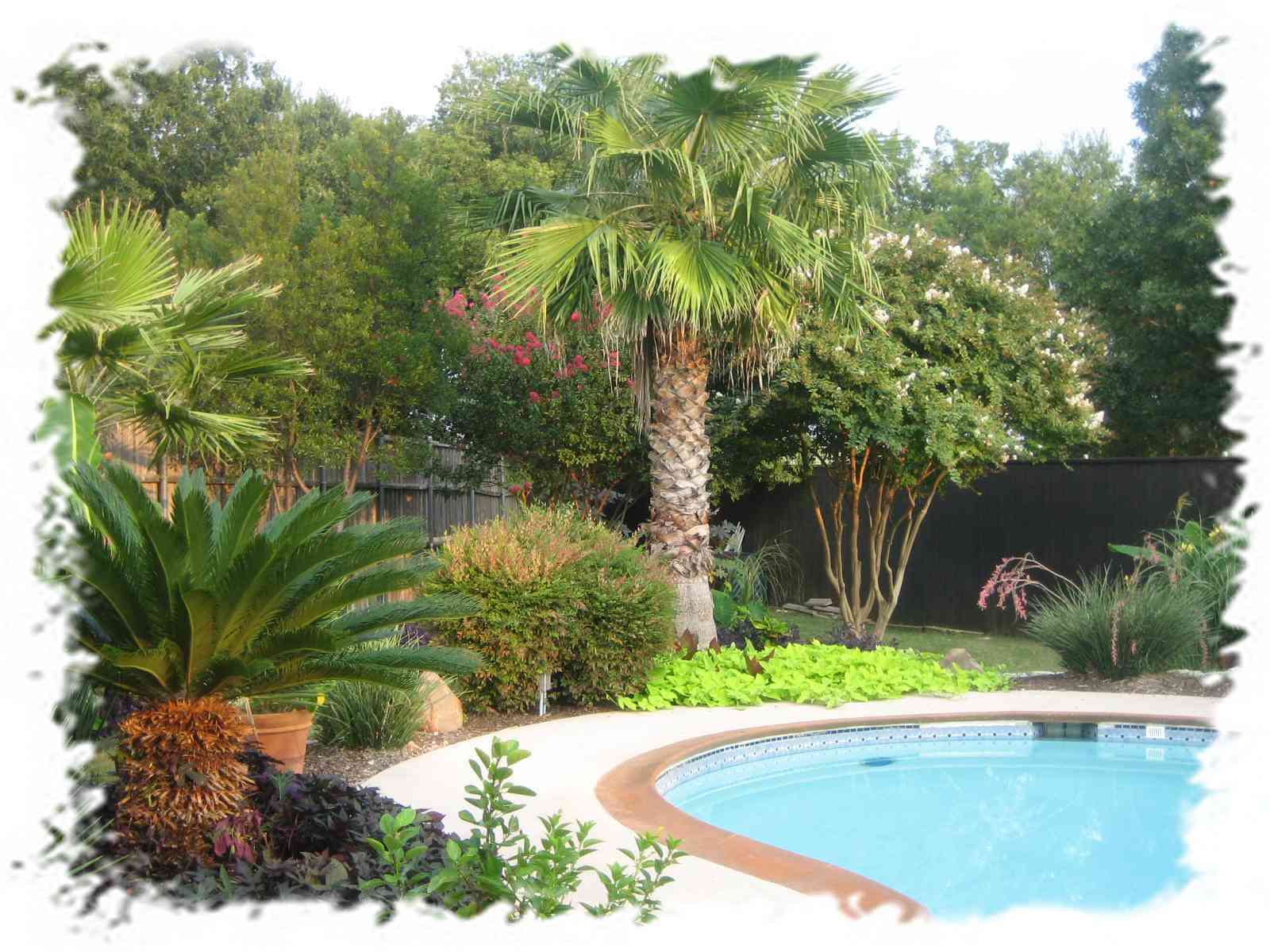 Free photo: palm trees backyard - Backyard, Branches ... on Palm Tree Backyard Ideas id=44978