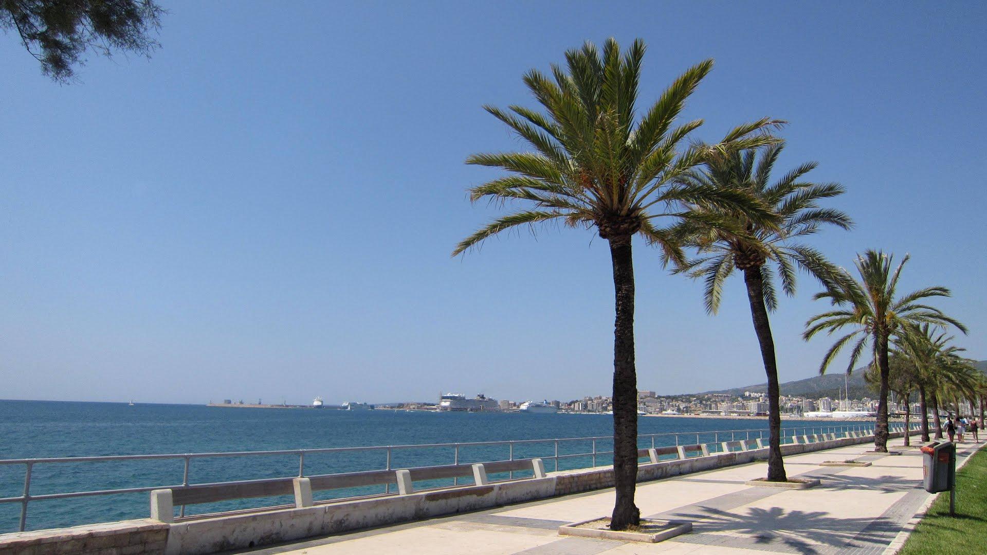 Palma photo
