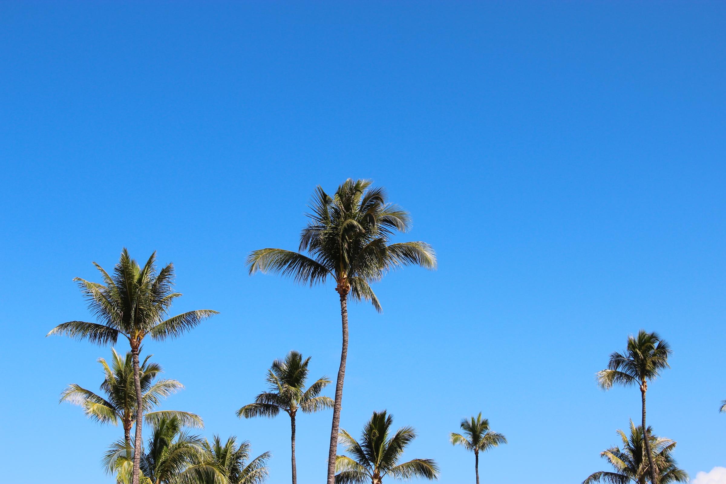 Sky palm trees photo