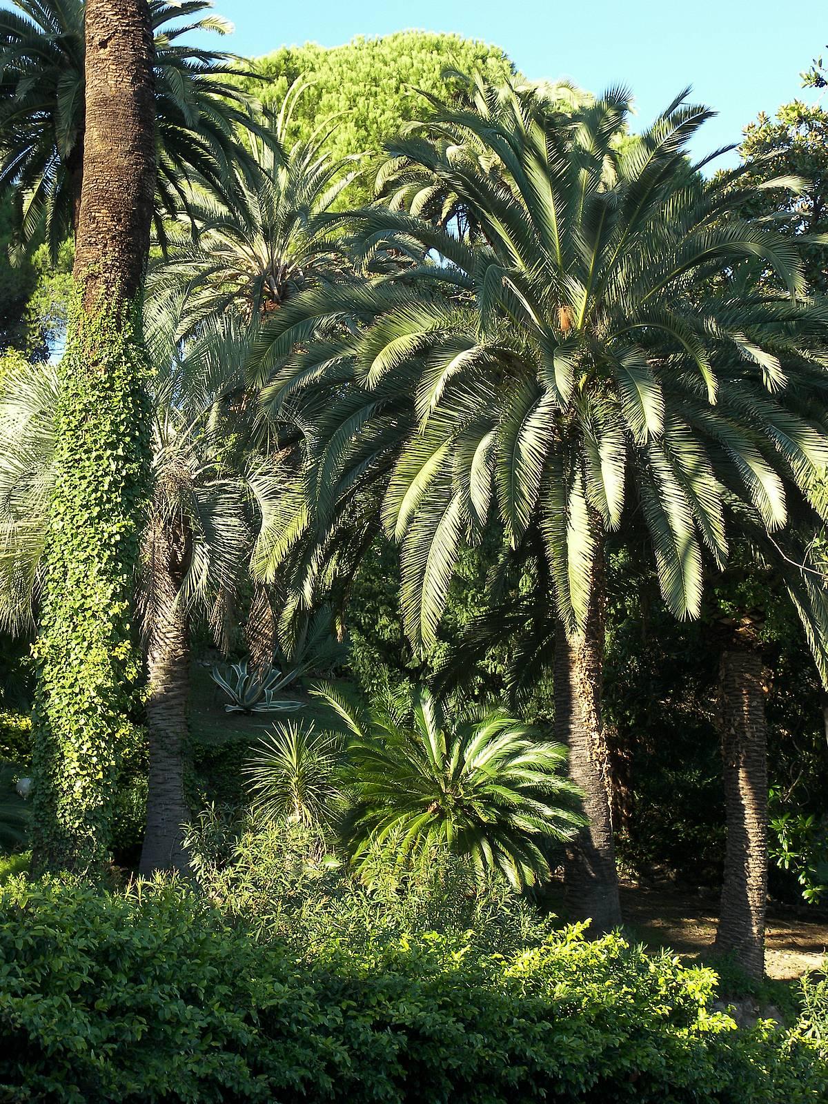 palms garden park - arecaceae mix