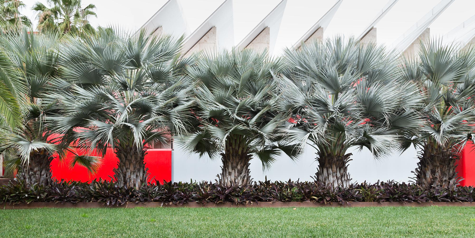 Robert Irwin's Palms | Unframed